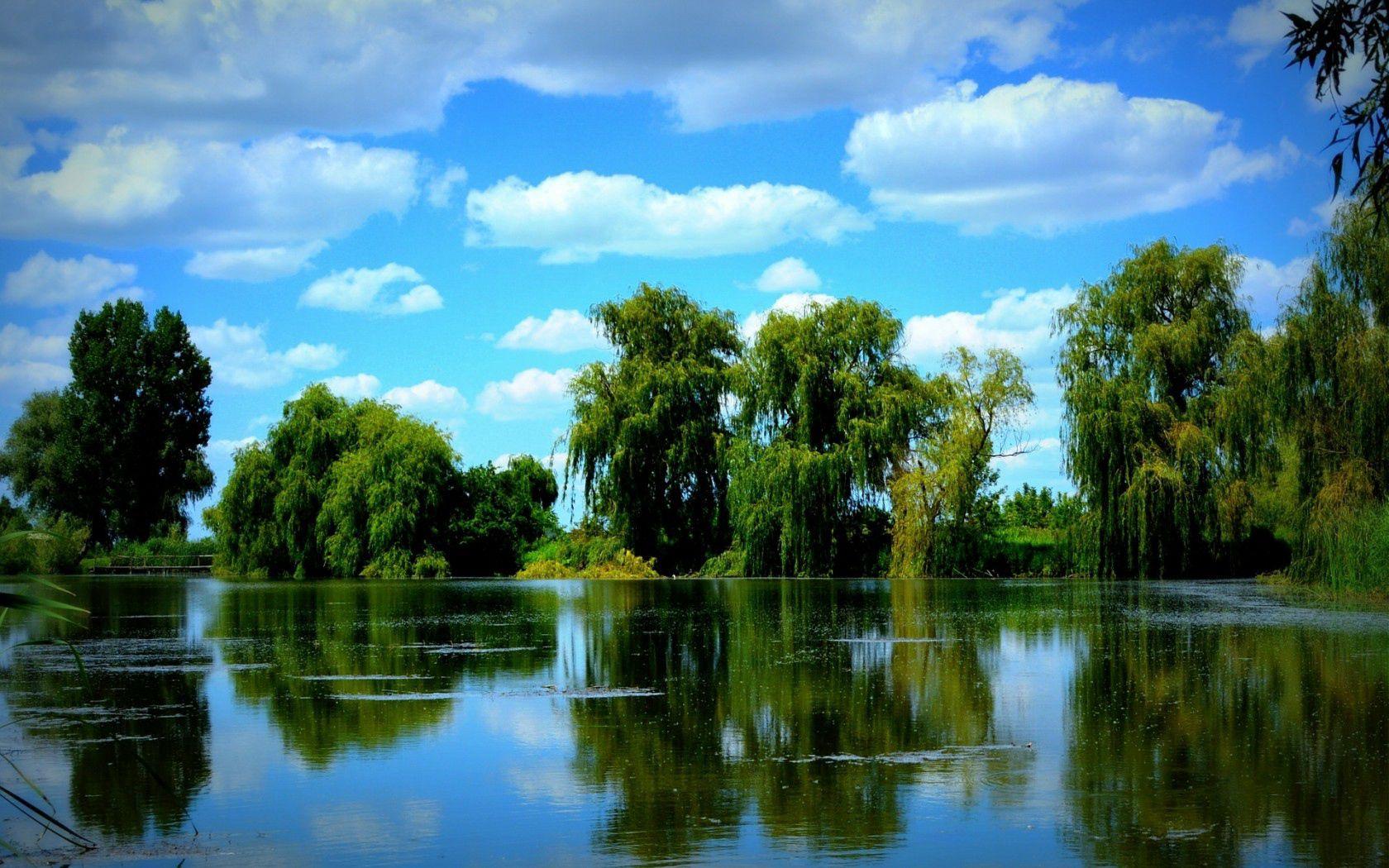 59671 скачать обои Деревья, Лето, Пруд, Природа, Небо - заставки и картинки бесплатно