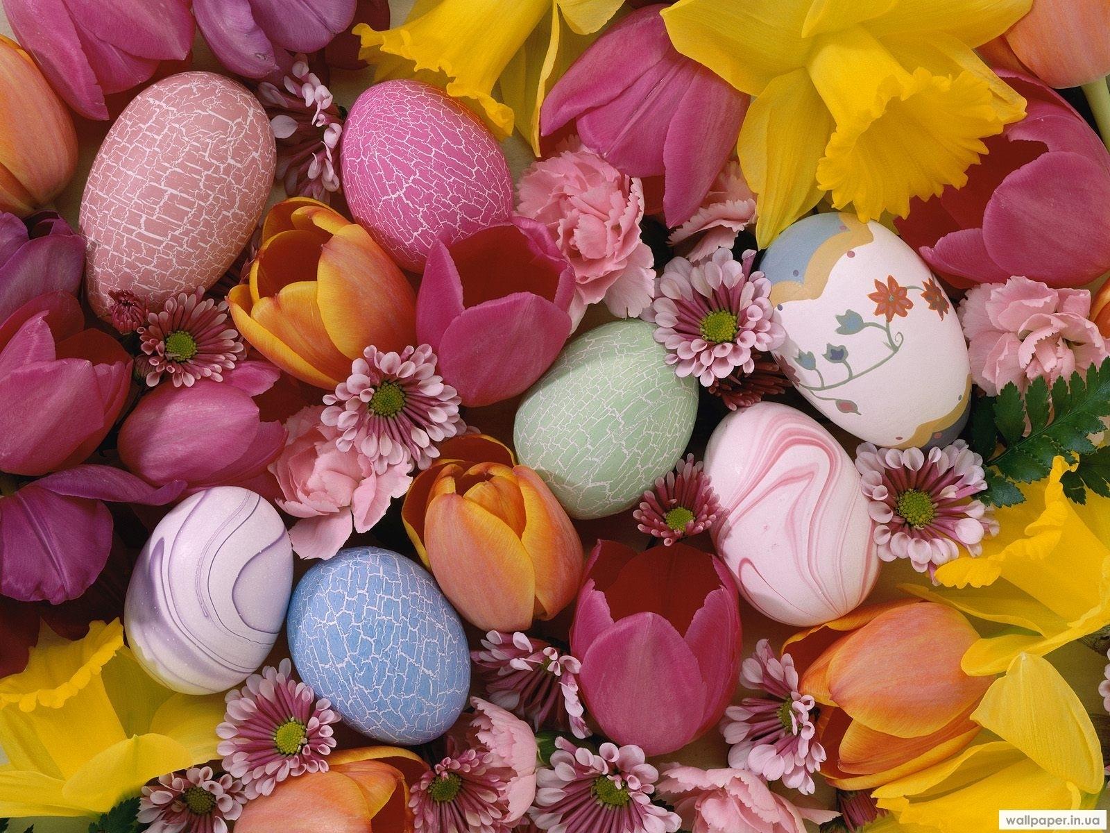 3443 descargar fondo de pantalla Plantas, Flores, Fondo, Huevos, Pascua: protectores de pantalla e imágenes gratis