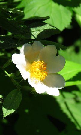 20823 скачать обои Растения, Цветы - заставки и картинки бесплатно