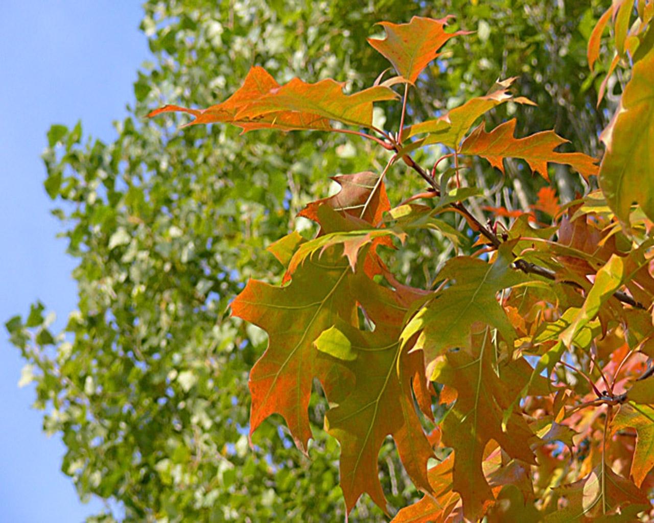 7263 скачать обои Пейзаж, Деревья, Осень, Листья - заставки и картинки бесплатно