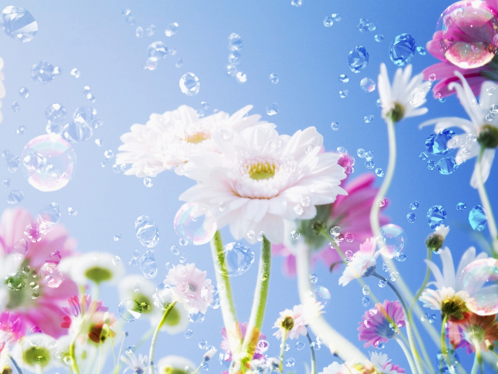 10423 descargar fondo de pantalla Plantas, Flores: protectores de pantalla e imágenes gratis