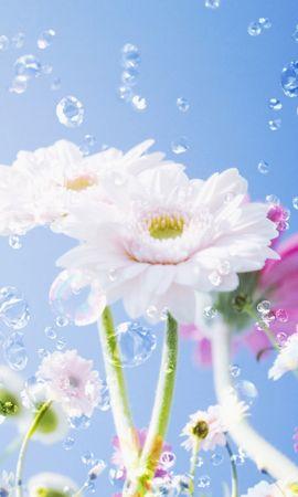 10423 скачать обои Растения, Цветы - заставки и картинки бесплатно