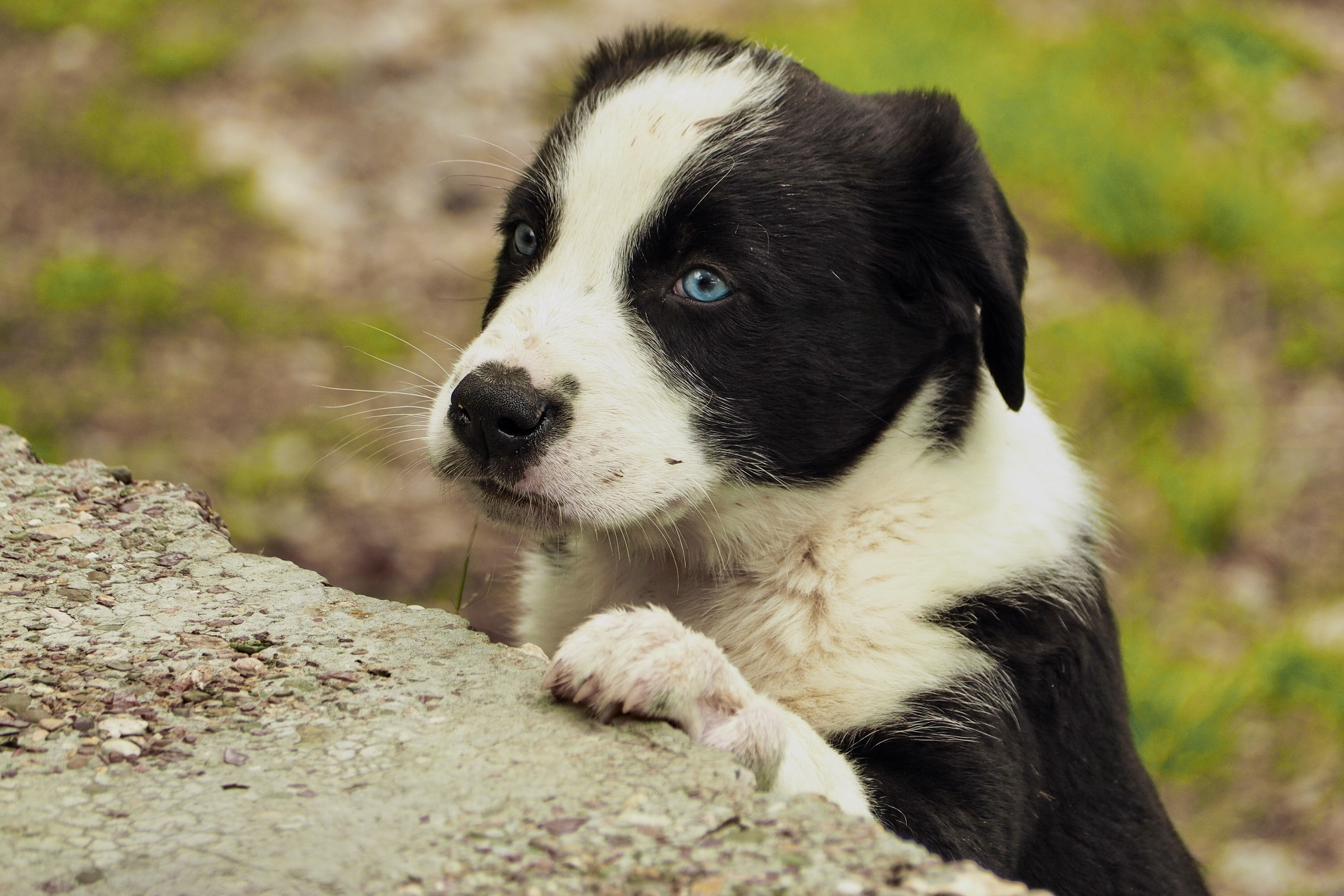 103230 Screensavers and Wallpapers Puppy for phone. Download Animals, Dog, Muzzle, Sight, Opinion, Puppy pictures for free