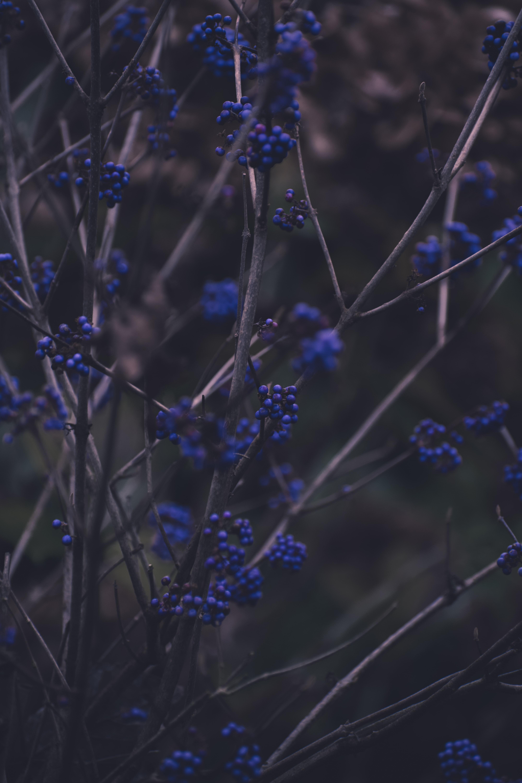 111649 papel de parede 720x1520 em seu telefone gratuitamente, baixe imagens Natureza, Berries, Plantar, Planta, Galhos, Ramos 720x1520 em seu celular