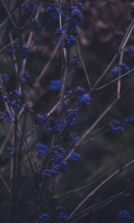 111649 télécharger le fond d'écran Nature, Branches, Plante, Planter, Baies - économiseurs d'écran et images gratuitement