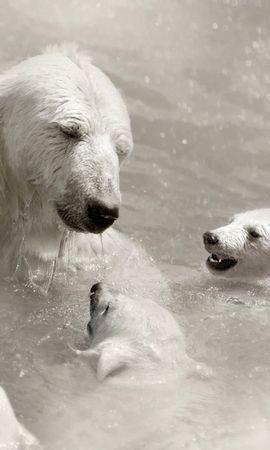 45906 baixar papel de parede Animais, Bears - protetores de tela e imagens gratuitamente
