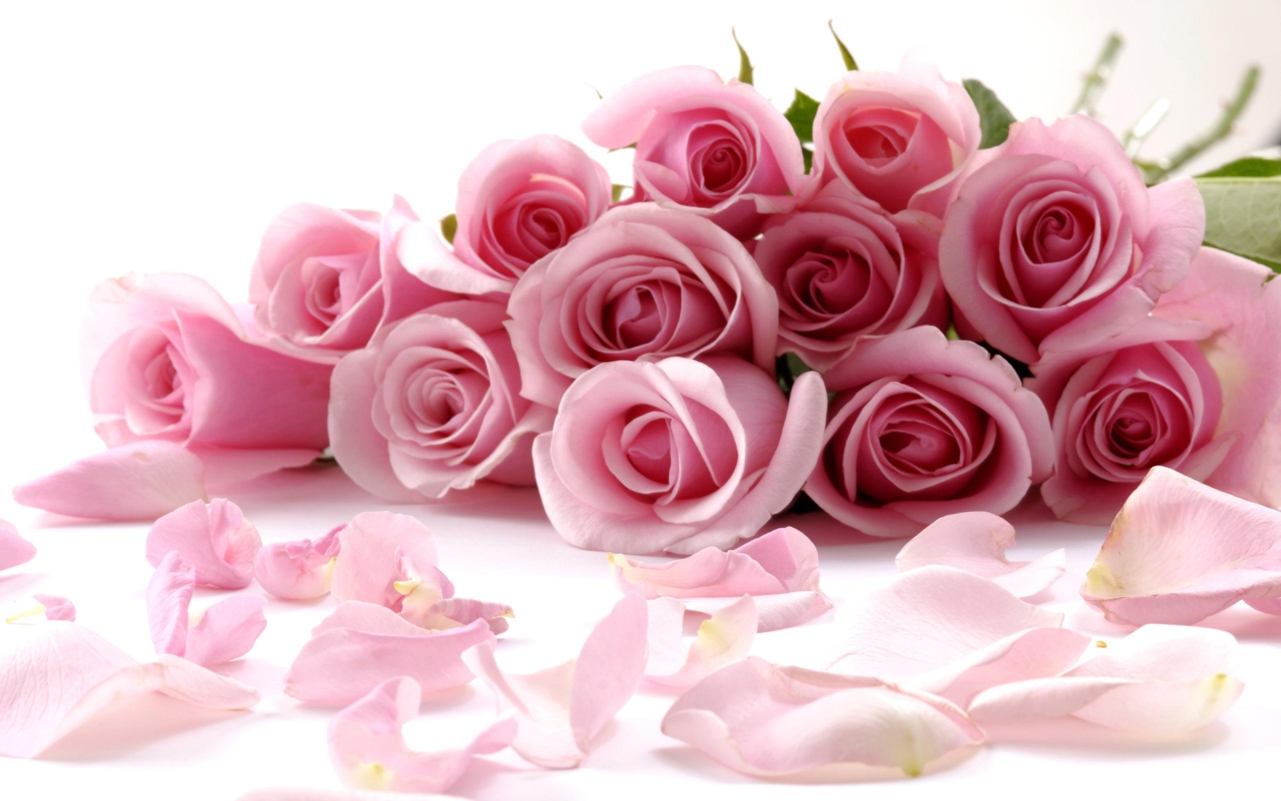 31700 скачать обои Растения, Цветы, Розы - заставки и картинки бесплатно