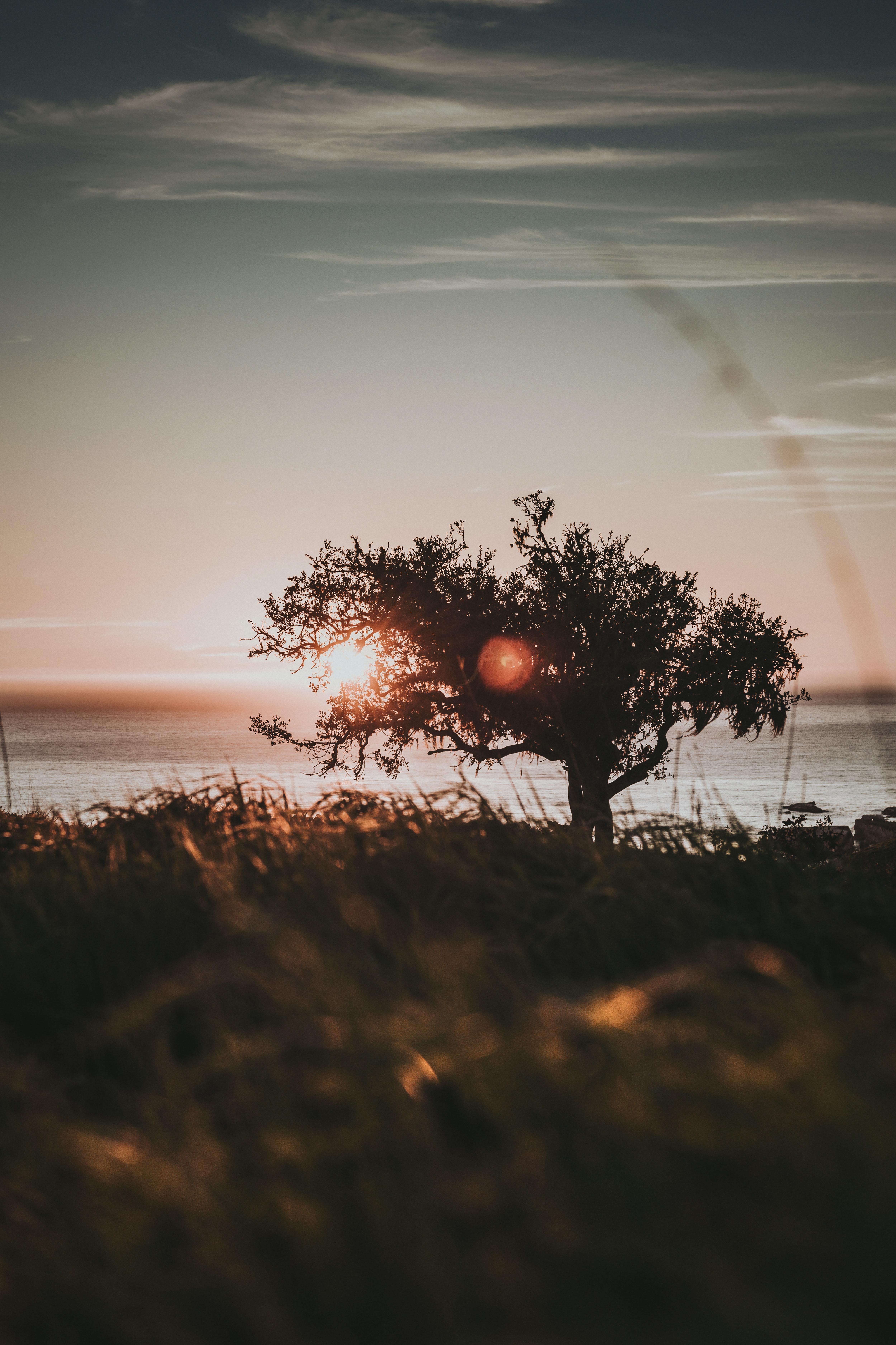 128464 Заставки и Обои Солнце на телефон. Скачать Солнце, Природа, Закат, Блики, Дерево картинки бесплатно