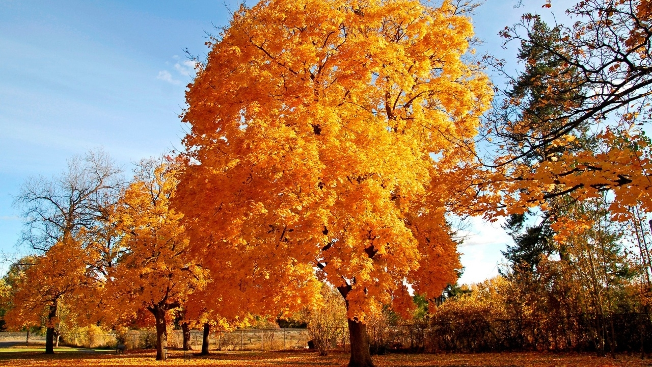 31754 download wallpaper Landscape, Trees, Autumn screensavers and pictures for free