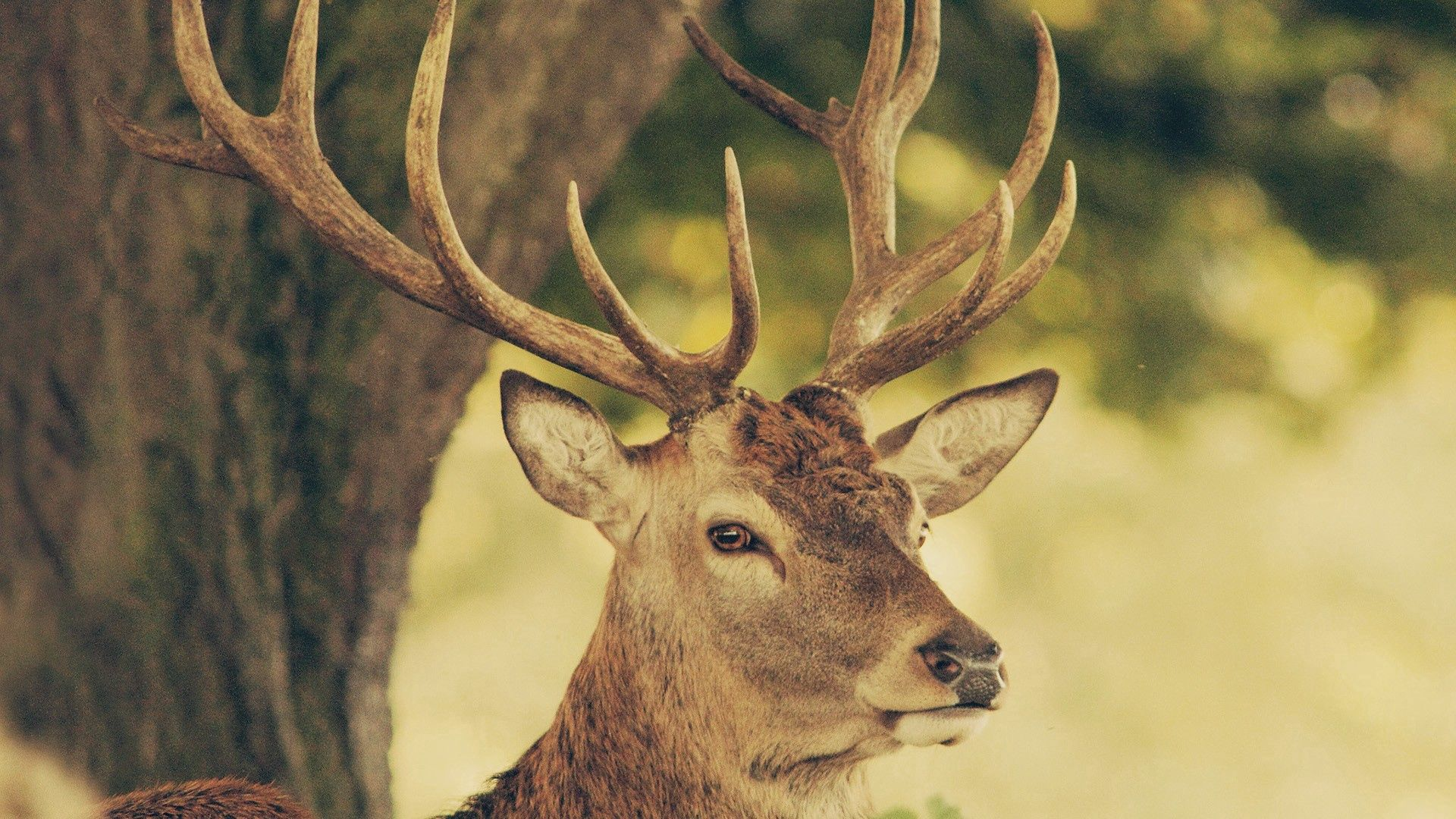 112935 download wallpaper Animals, Deer, Muzzle, Horns, Nature screensavers and pictures for free