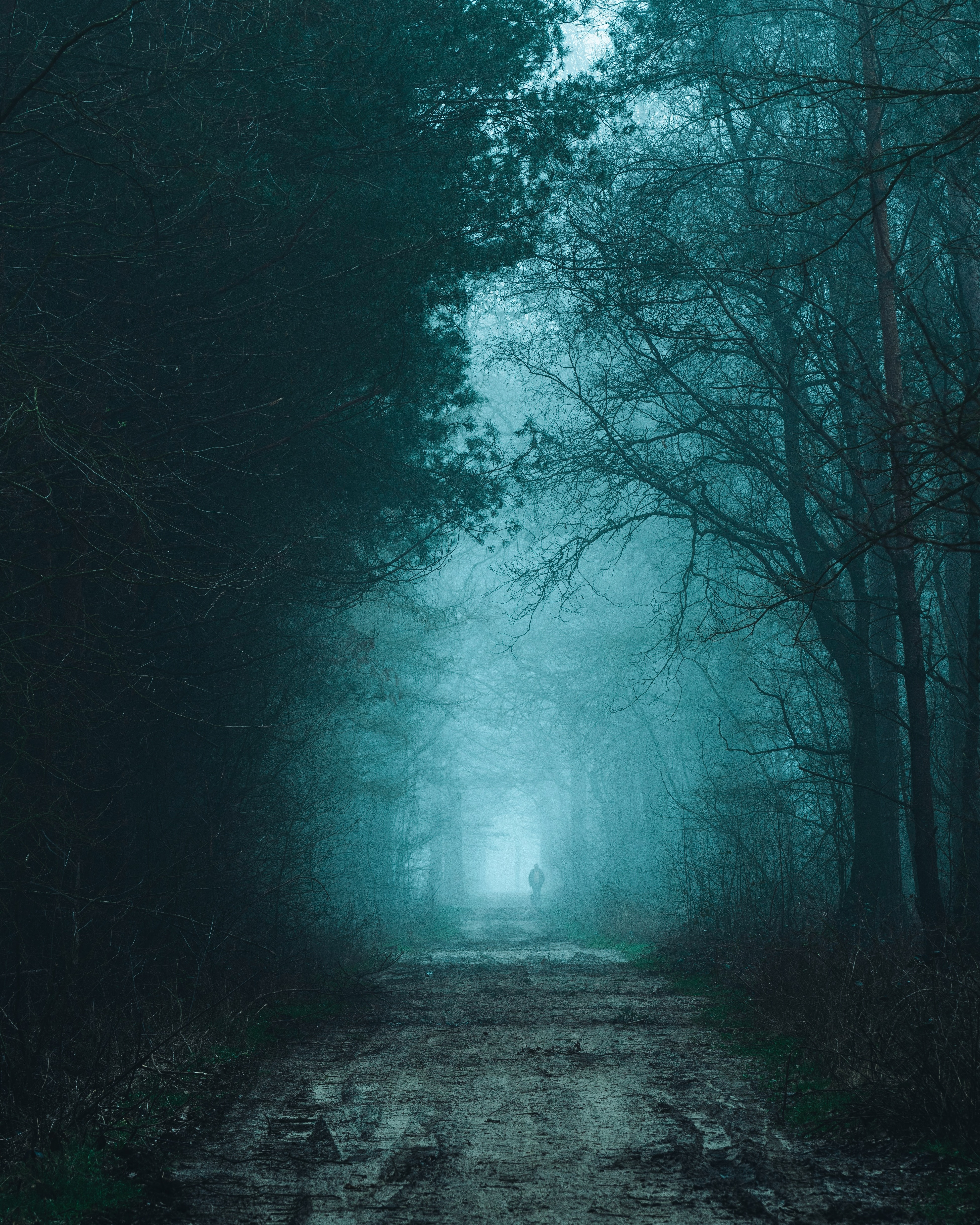 129497 download wallpaper Nature, Silhouette, Road, Forest, Fog, Darkness screensavers and pictures for free