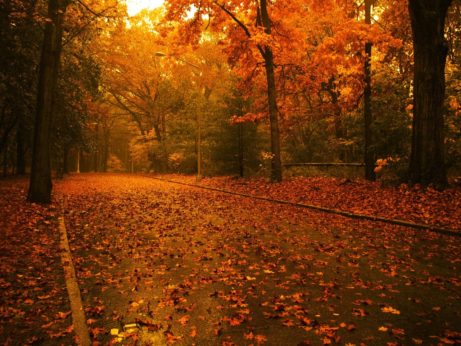 11647 download wallpaper Landscape, Trees, Roads, Autumn screensavers and pictures for free