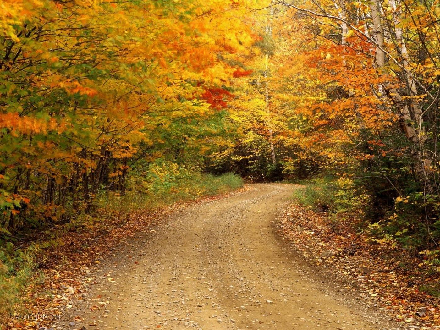 24259 скачать обои Пейзаж, Деревья, Дороги, Осень - заставки и картинки бесплатно