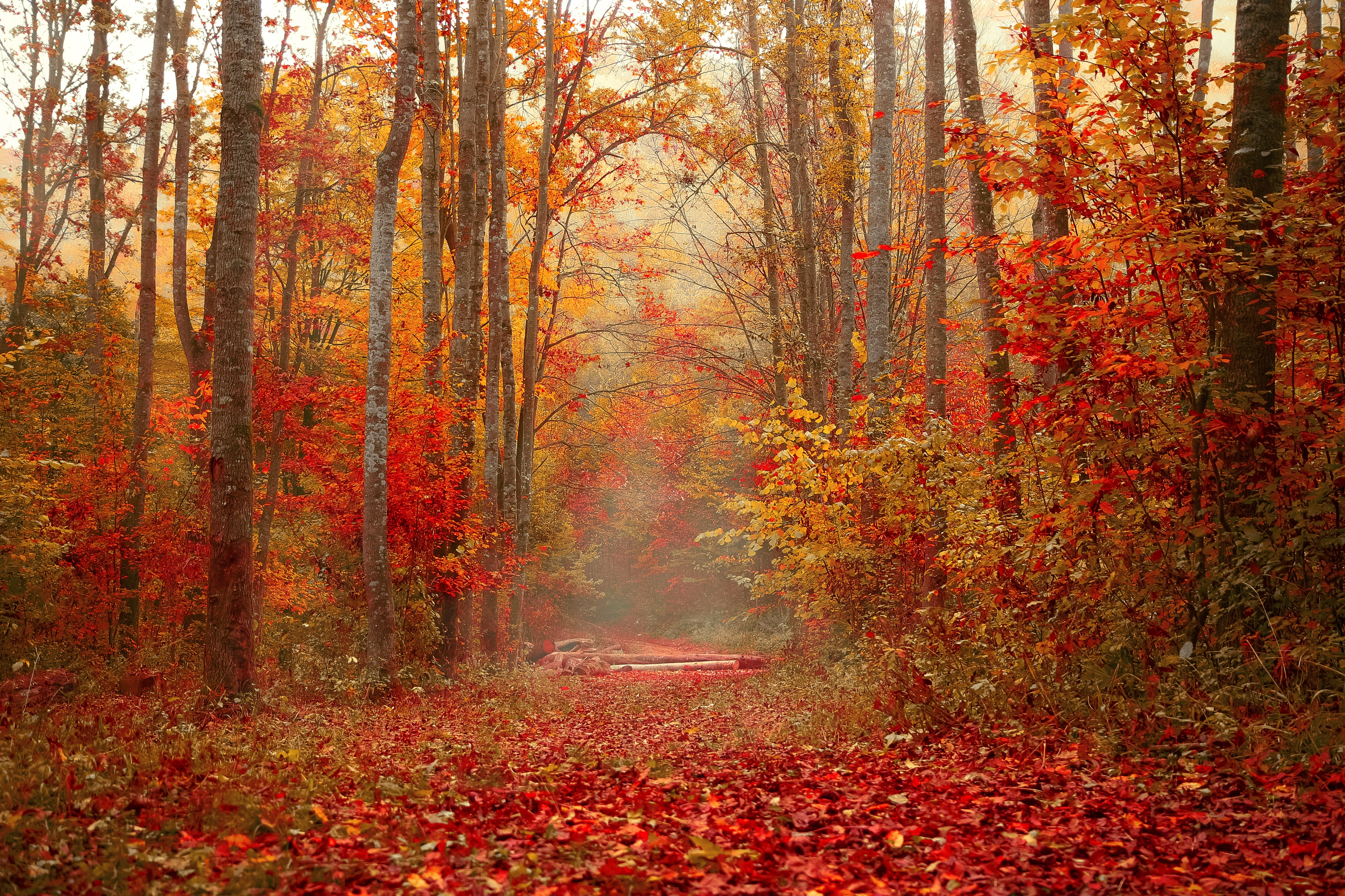 155459 download wallpaper Nature, Autumn, Forest, Foliage, Trees, Colorful, Colourful screensavers and pictures for free