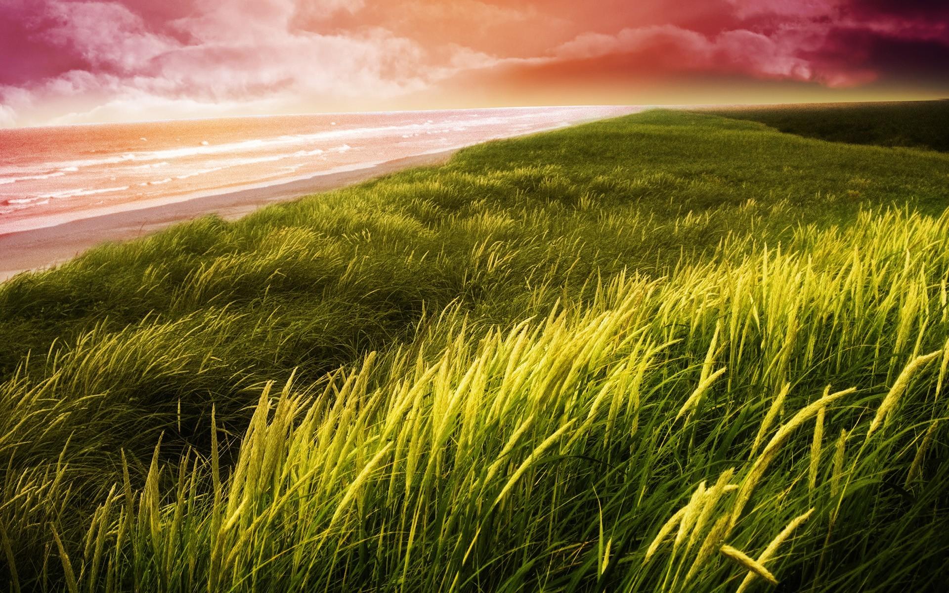 29595 скачать обои Пейзаж, Трава, Море - заставки и картинки бесплатно
