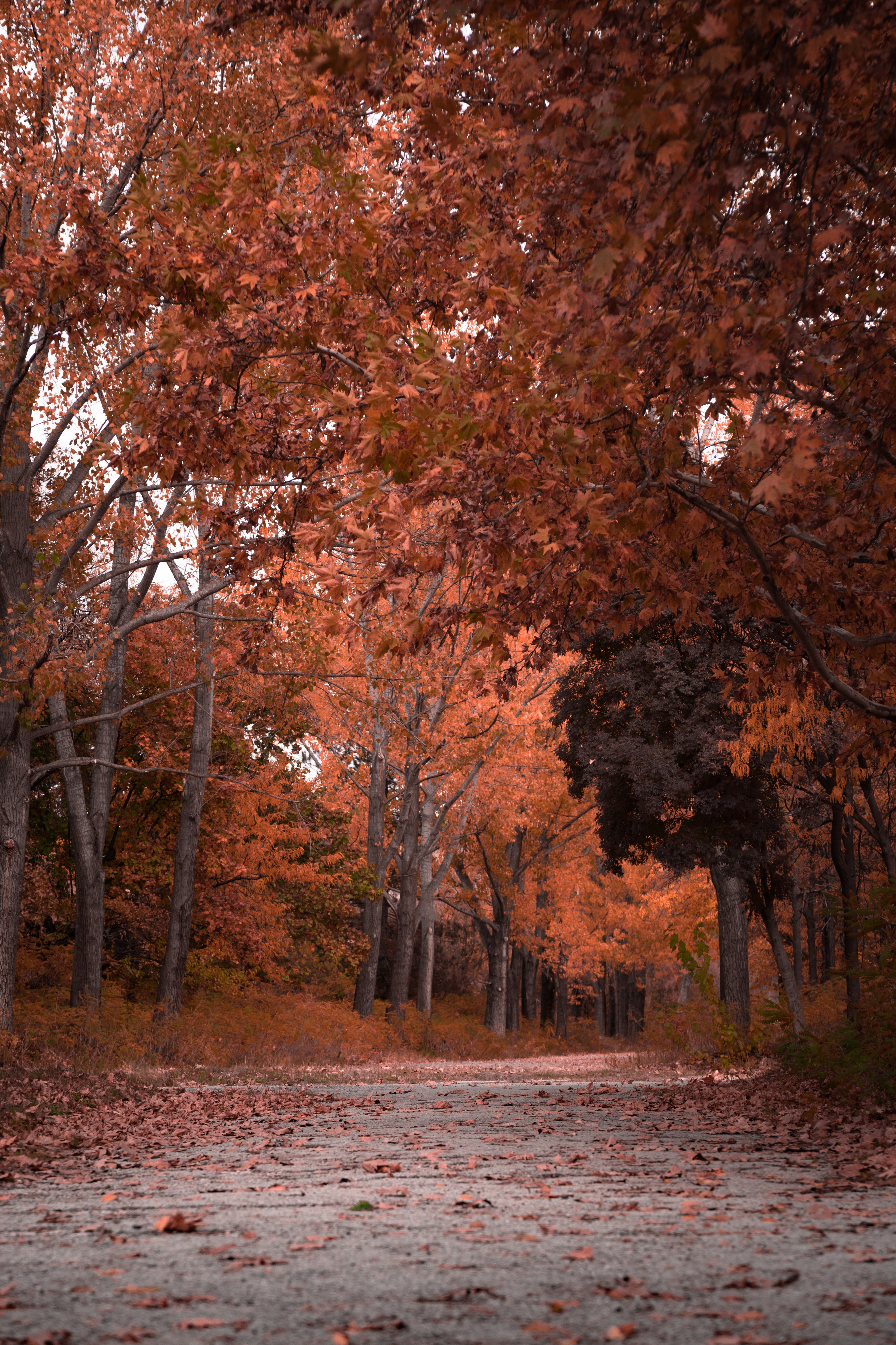 55949 download wallpaper Nature, Trees, Autumn, Park, Foliage screensavers and pictures for free