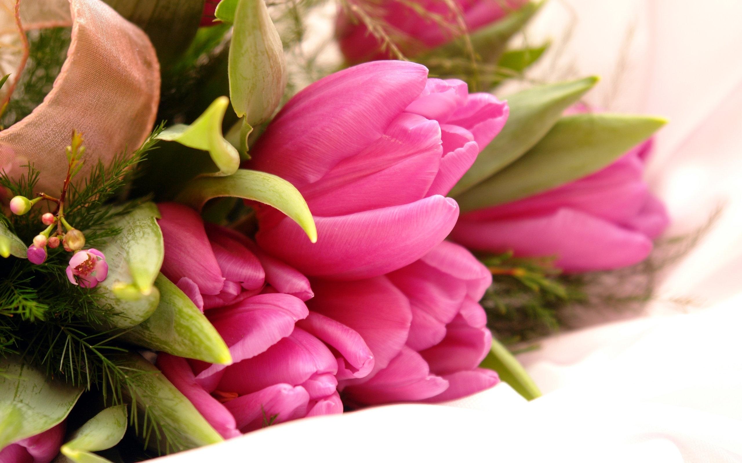 46681 скачать обои Растения, Цветы, Тюльпаны - заставки и картинки бесплатно