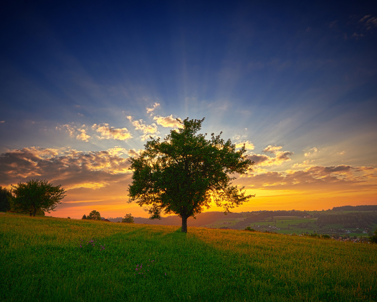 11163 download wallpaper Landscape, Trees, Sunset, Sky screensavers and pictures for free