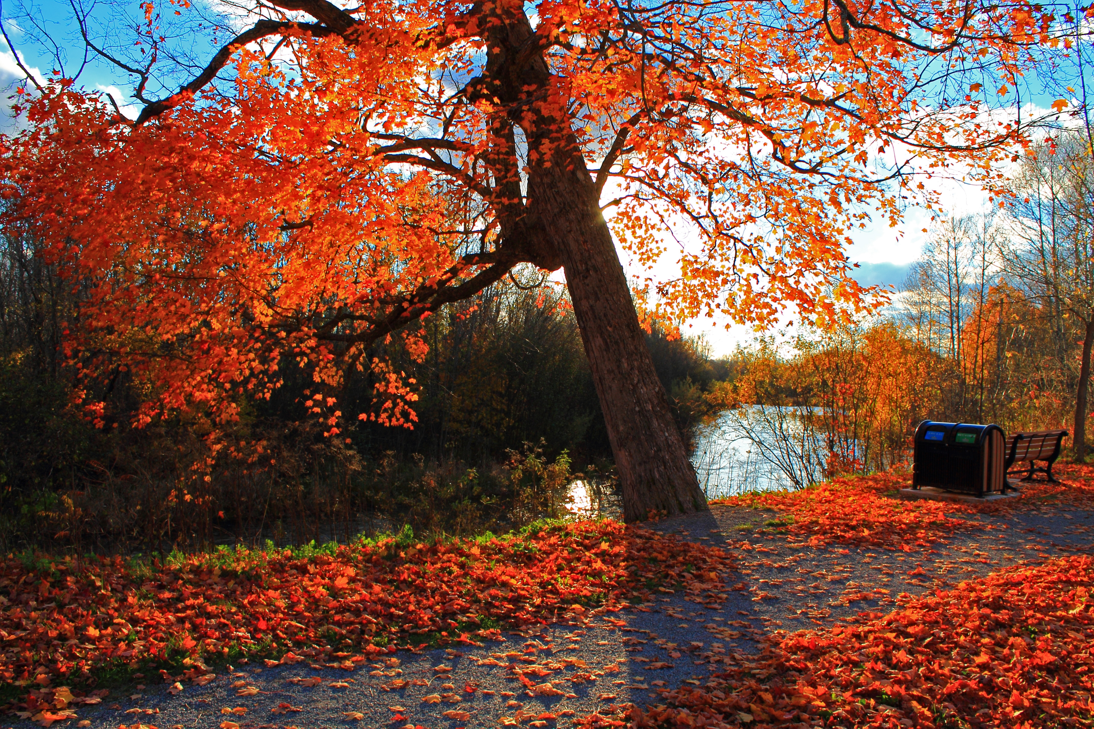 123760 Screensavers and Wallpapers Bench for phone. Download Landscape, Nature, Autumn, Park, Bench, River pictures for free