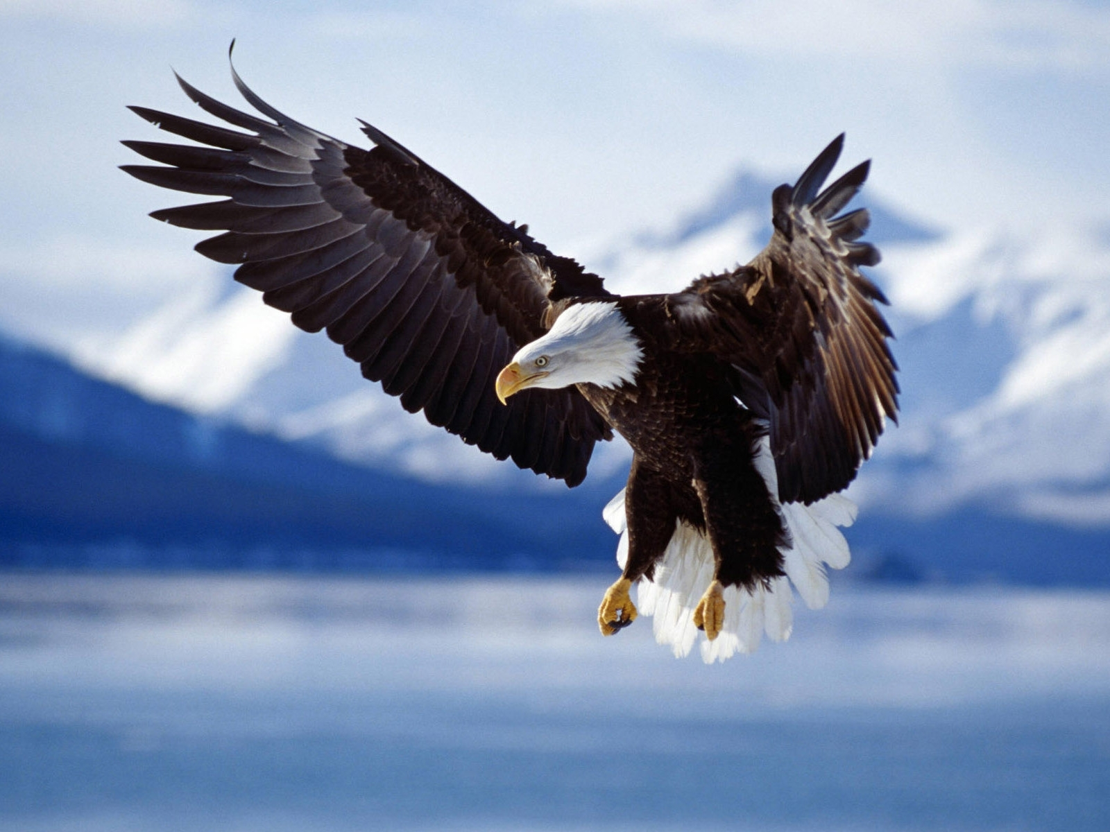 5601 download wallpaper Animals, Birds, Eagles screensavers and pictures for free