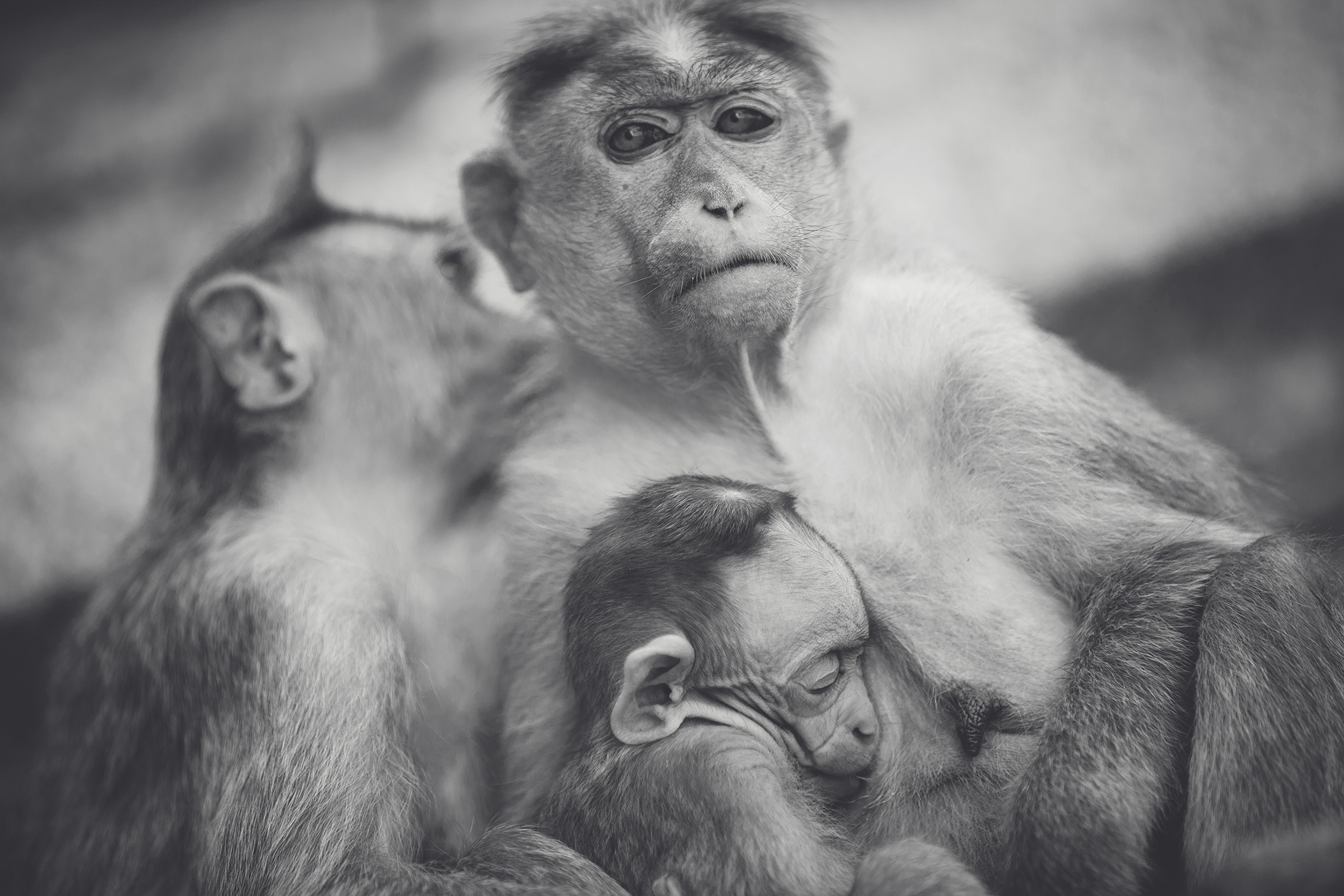 86129 Screensavers and Wallpapers Monkeys for phone. Download Animals, Monkeys, Young, Bw, Chb, Joey pictures for free