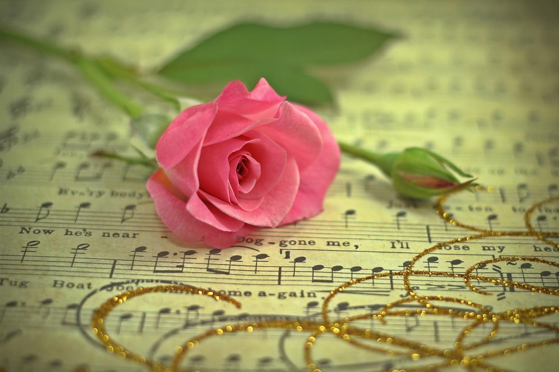 61765 Hintergrundbild herunterladen Musik, Blumen, Gold-, Blume, Rose, Thread, Anmerkungen, Ein Faden - Bildschirmschoner und Bilder kostenlos