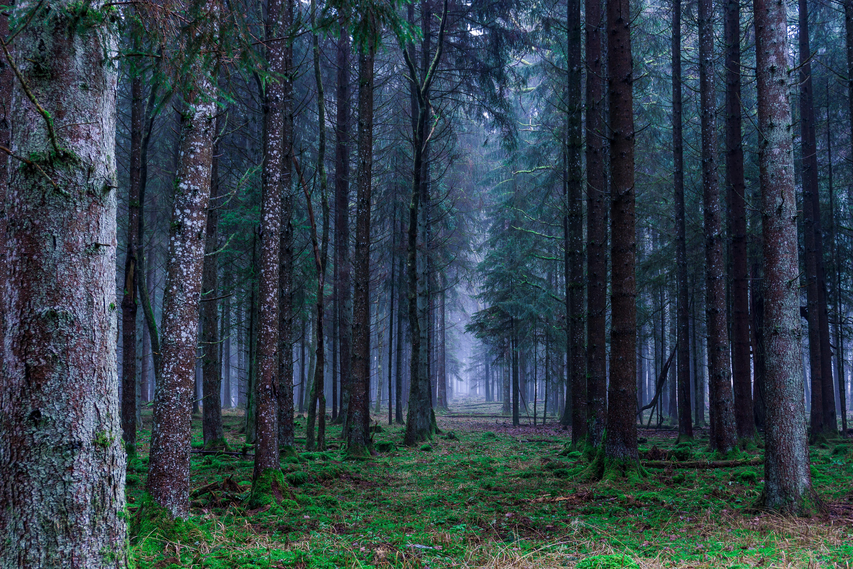 126658 papel de parede 720x1280 em seu telefone gratuitamente, baixe imagens Natureza, Árvores, Grama, Floresta, Névoa, Nevoeiro 720x1280 em seu celular