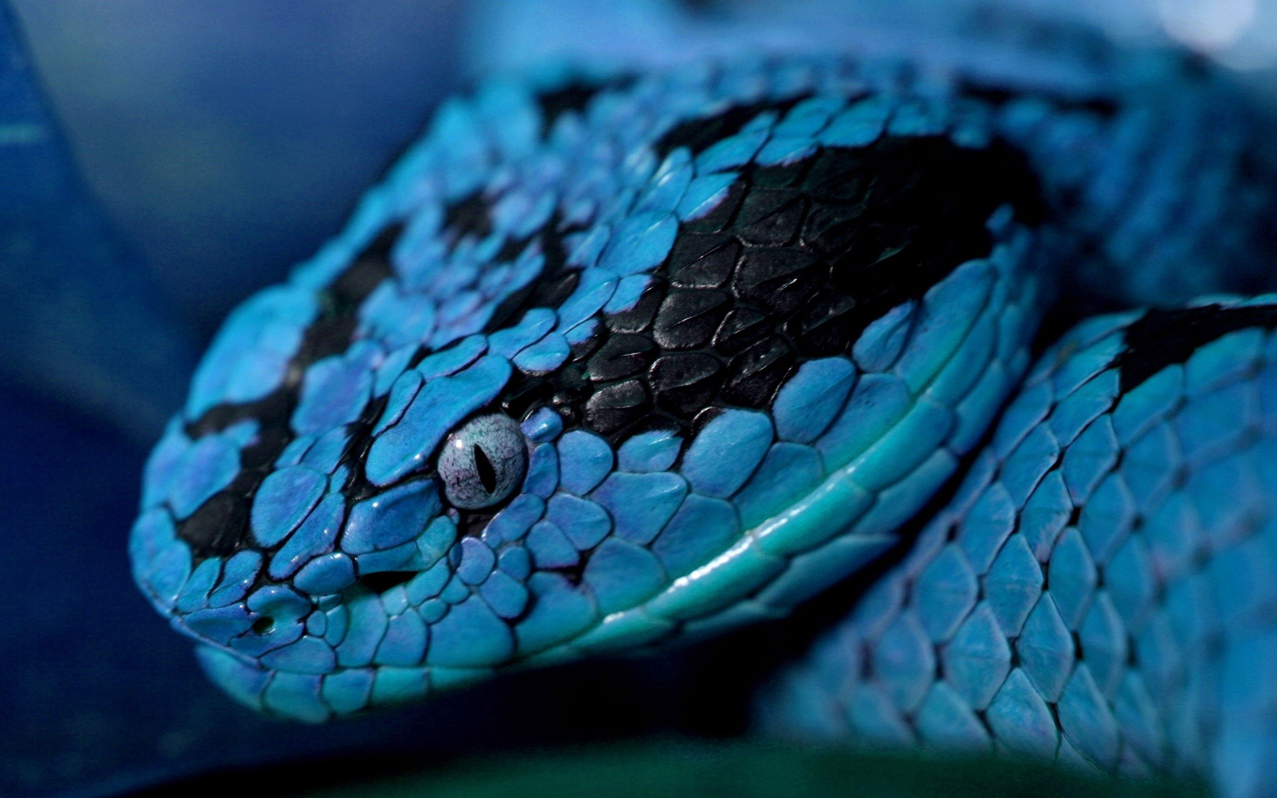 152063 Screensavers and Wallpapers Snake for phone. Download Animals, Eyes, Color, Snake, Head pictures for free