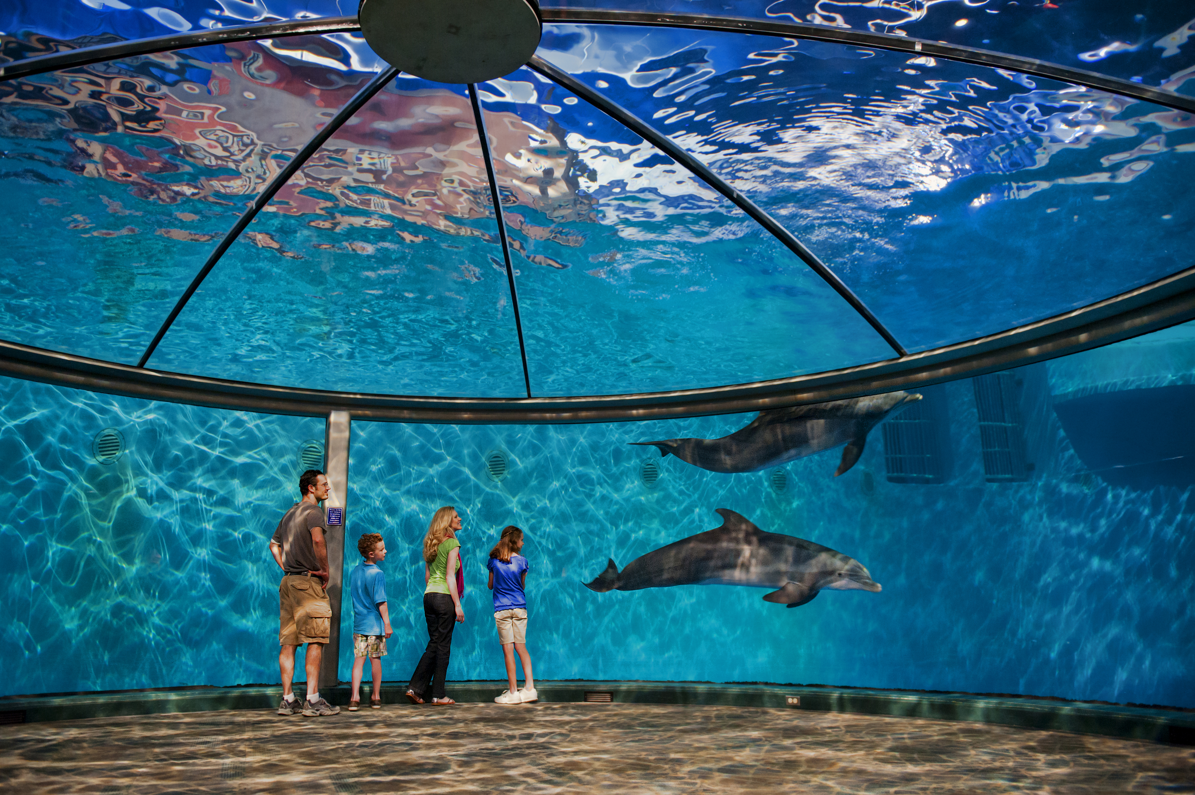69805 download wallpaper Dolfins, Miscellanea, Miscellaneous, Indianapolis, Indianapolis Zoo screensavers and pictures for free