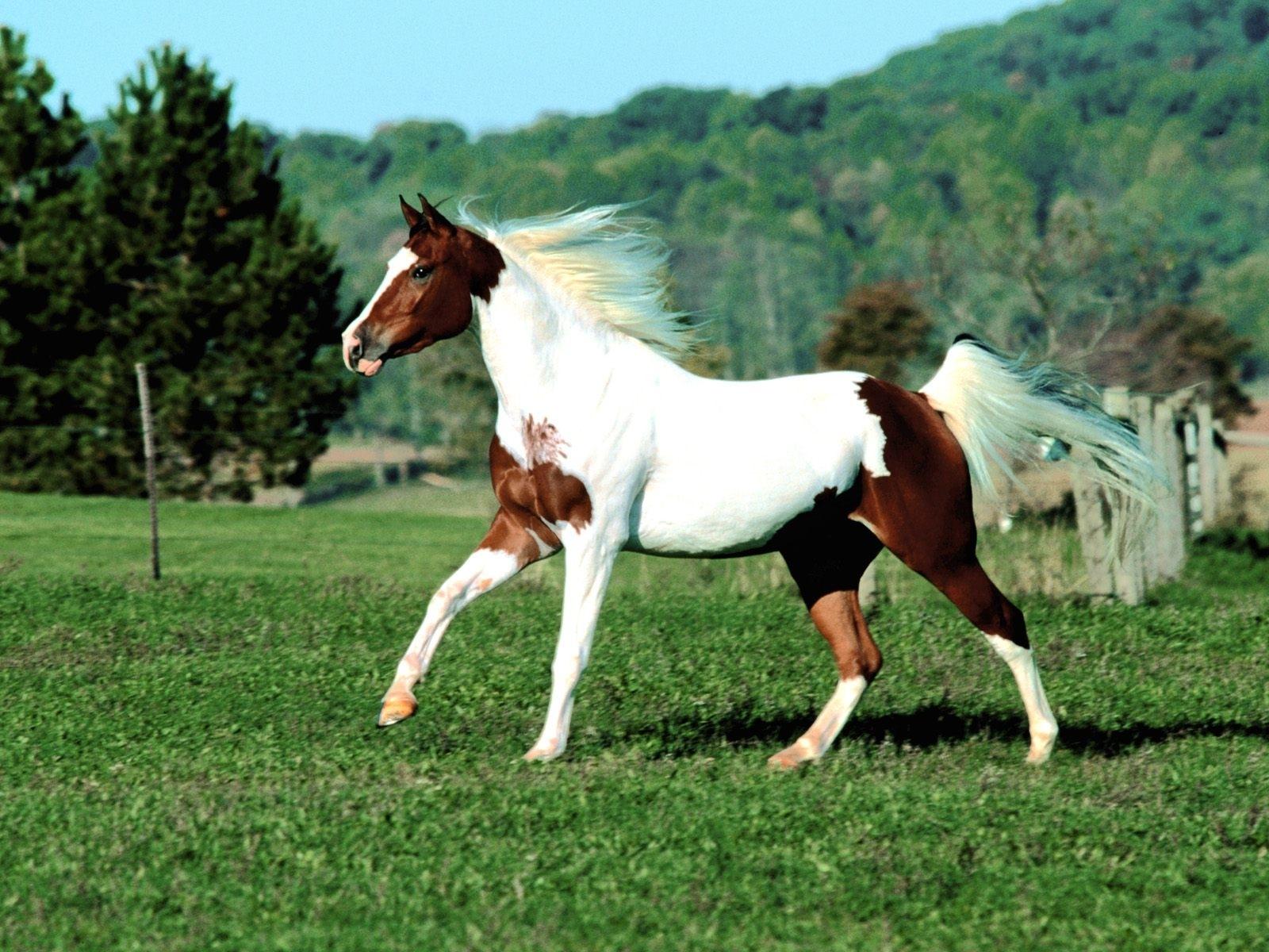 1800 скачать обои Лошади, Животные - заставки и картинки бесплатно