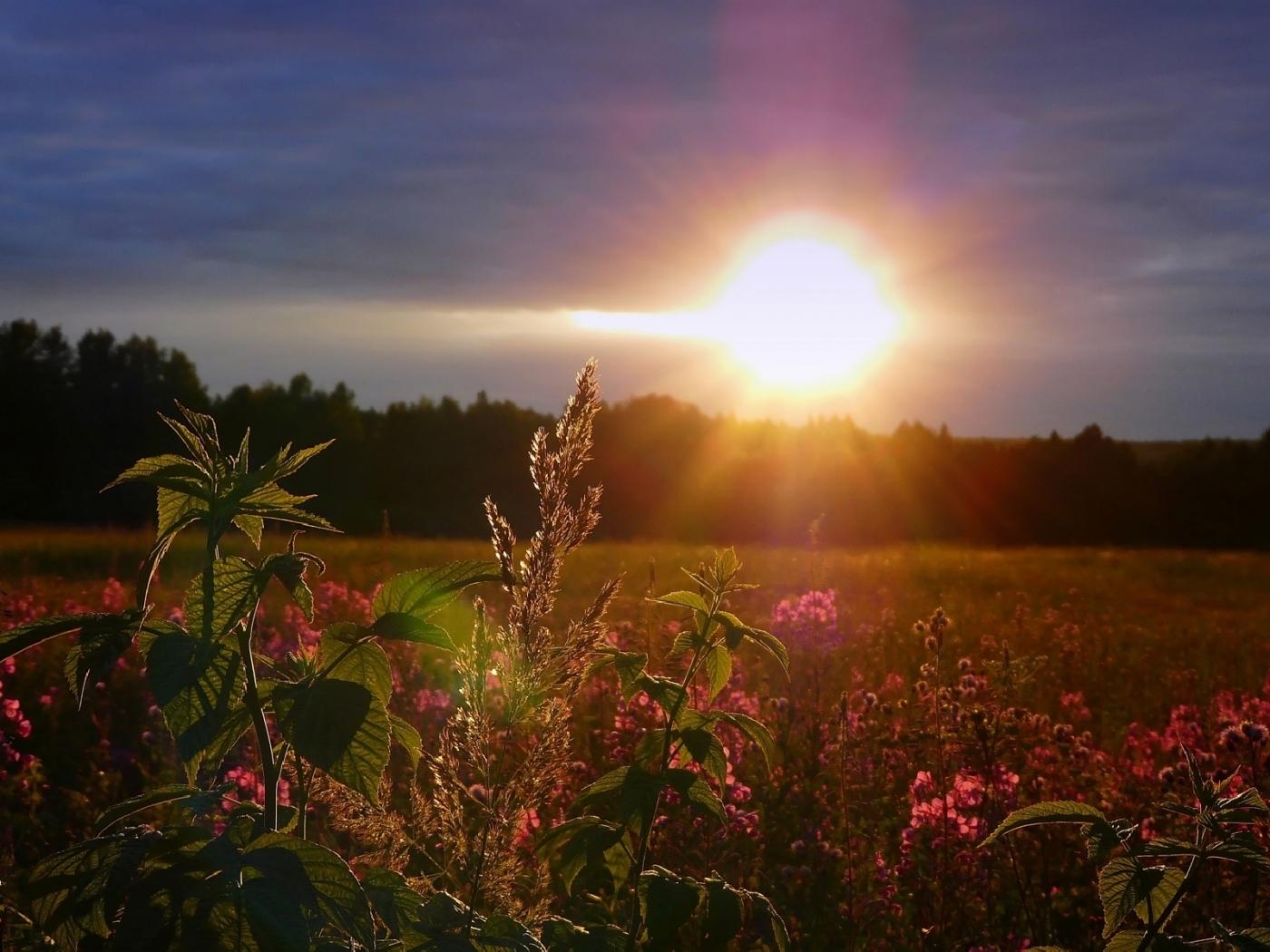 27301 скачать обои Пейзаж, Закат, Поля, Солнце - заставки и картинки бесплатно