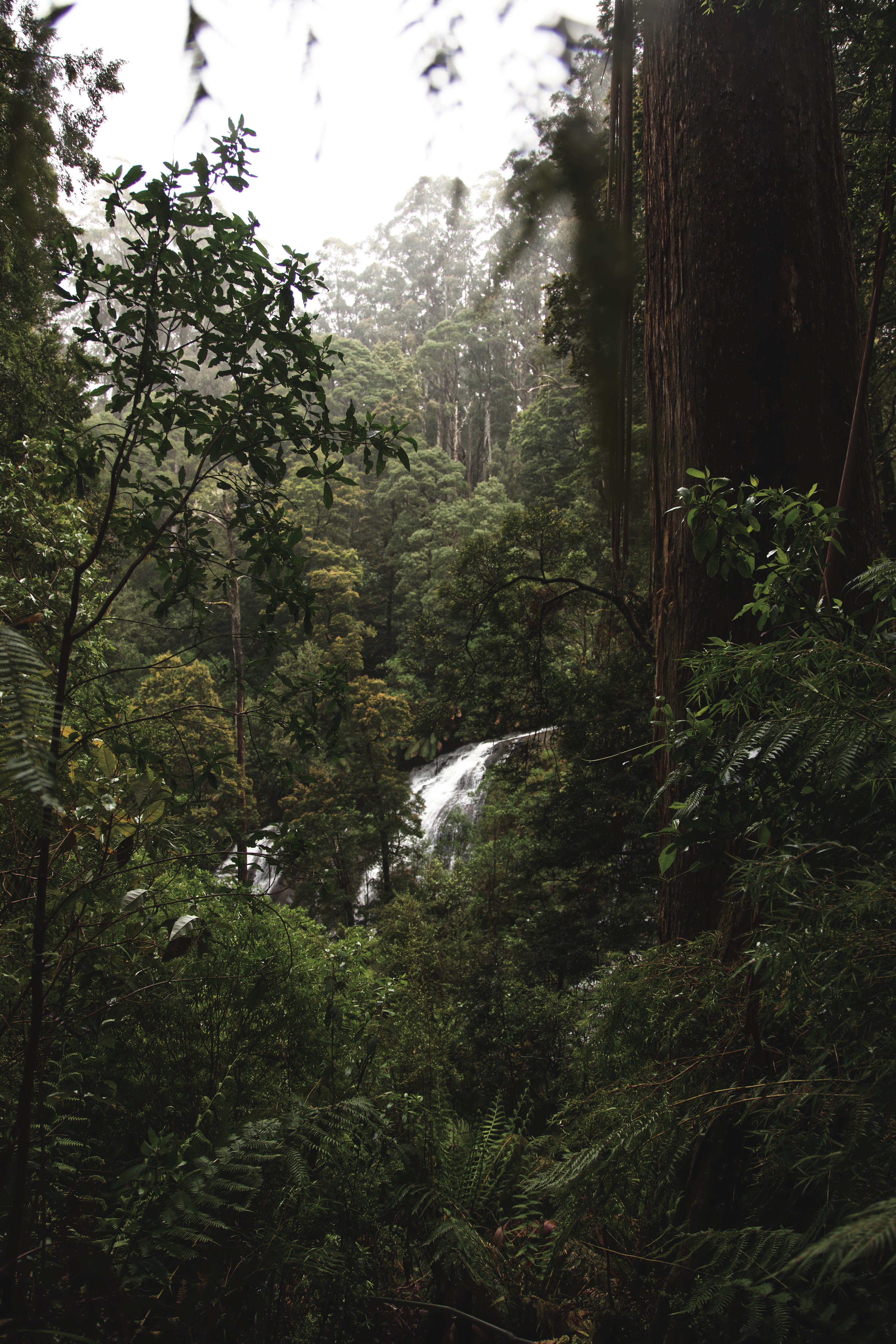 157189 download wallpaper Nature, Forest, Jungle, Waterfall, Trees, Bush screensavers and pictures for free