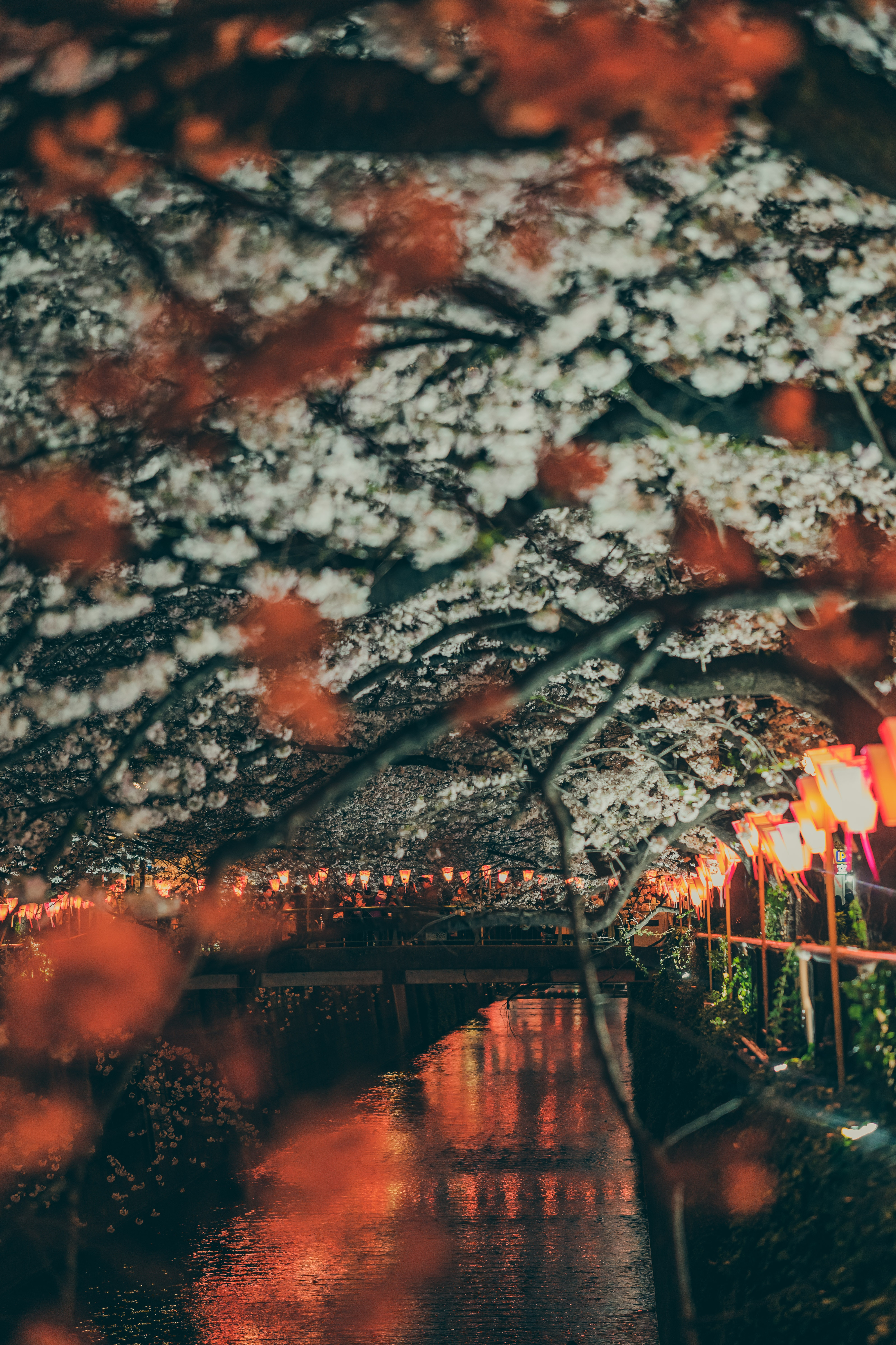 140015 Screensavers and Wallpapers Sakura for phone. Download Cities, Rivers, Sakura, Lights, Park, Lanterns, Bridge, Embankment, Quay pictures for free