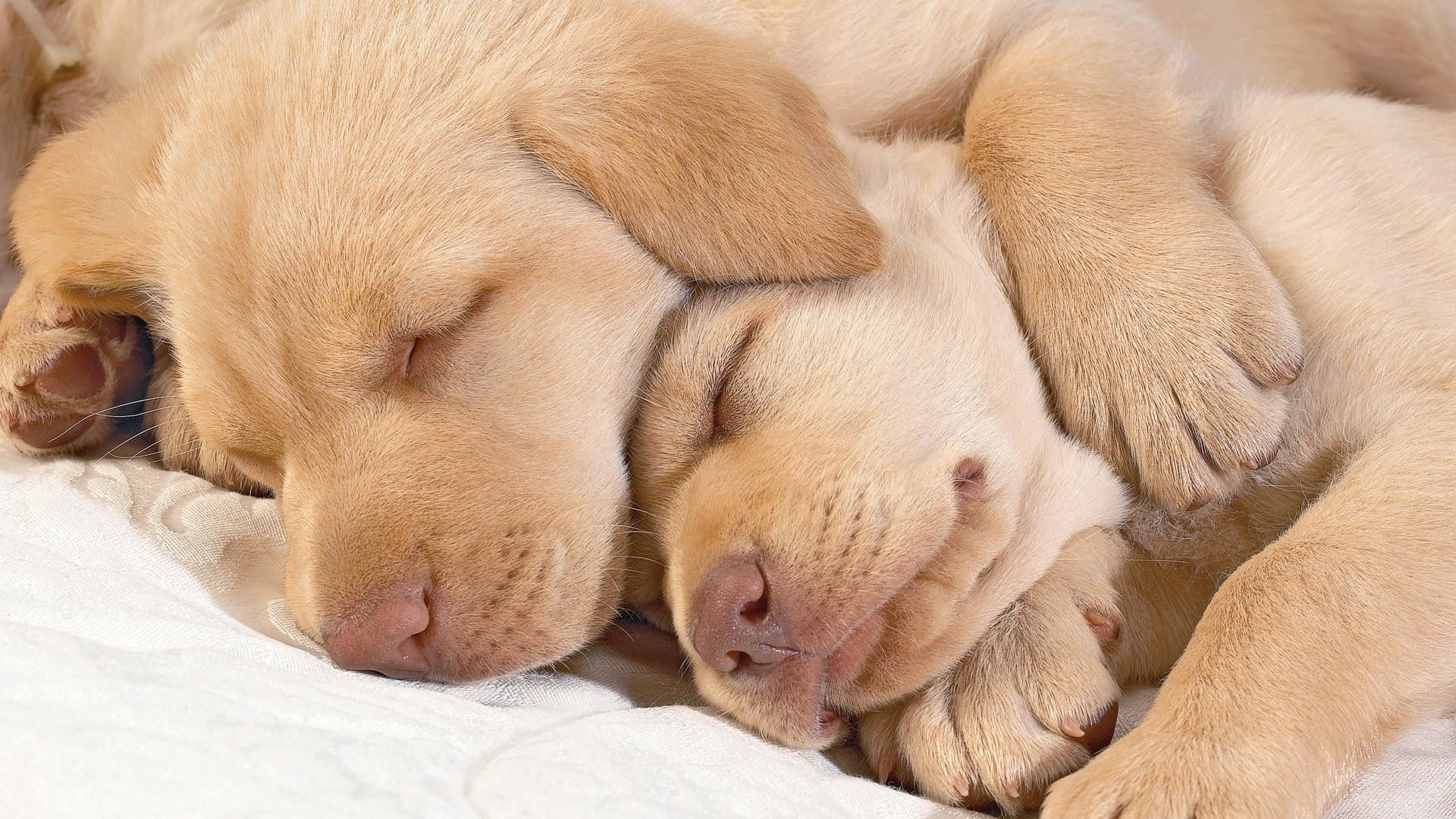 110162 download wallpaper Animals, Puppies, Sleep, Dream, Muzzle, Toddlers, Kids screensavers and pictures for free