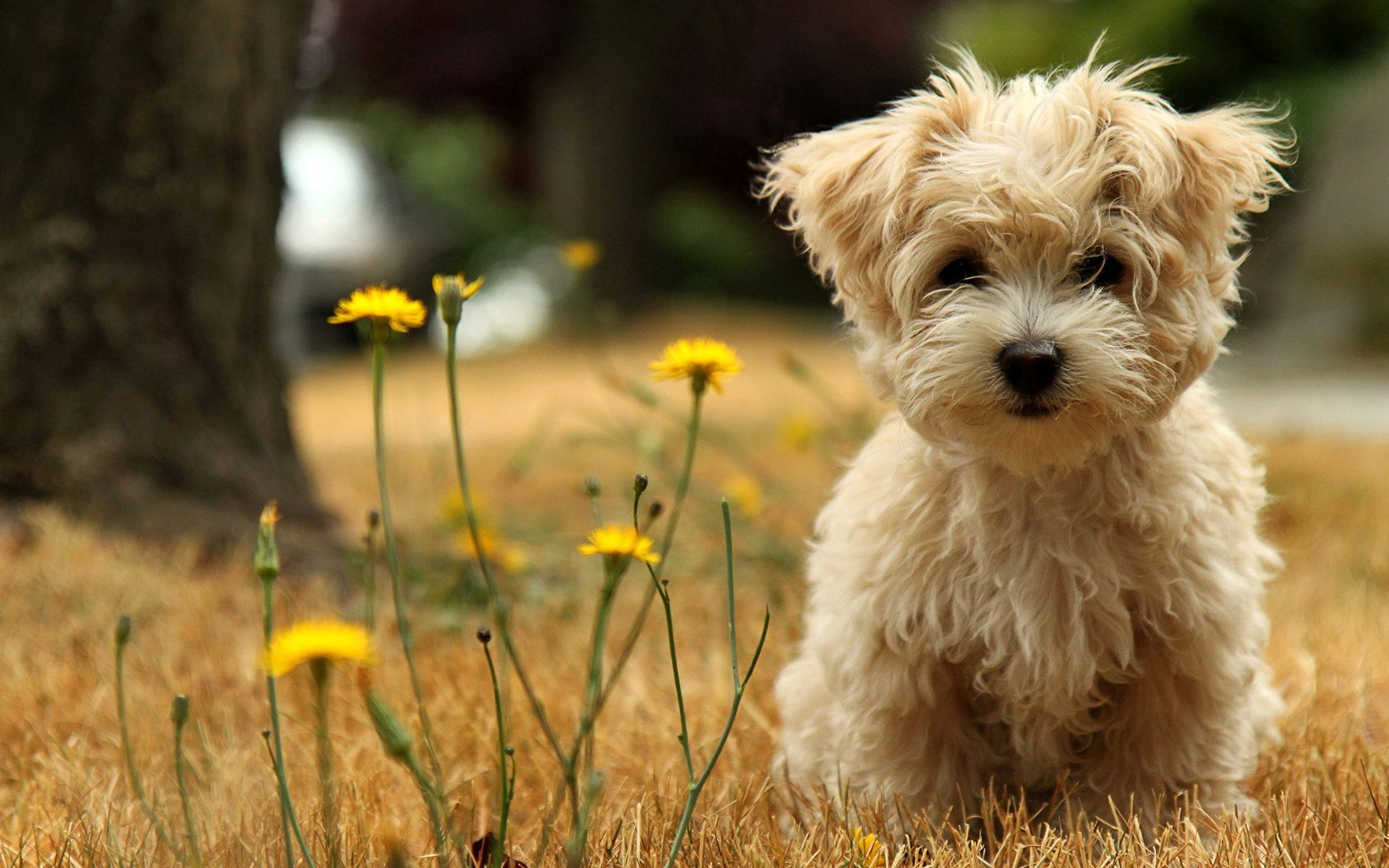 118535 download wallpaper Animals, Dog, Puppy, Grass, Flower screensavers and pictures for free