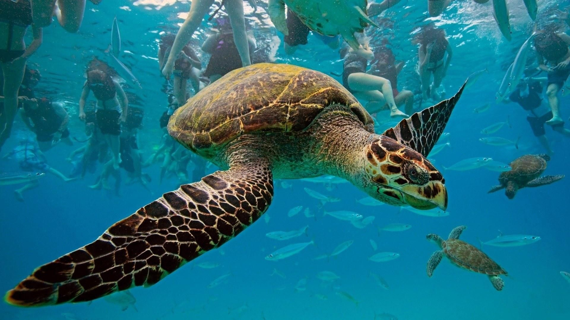 113161 download wallpaper Animals, Turtles, Underwater World, To Swim, Swim screensavers and pictures for free