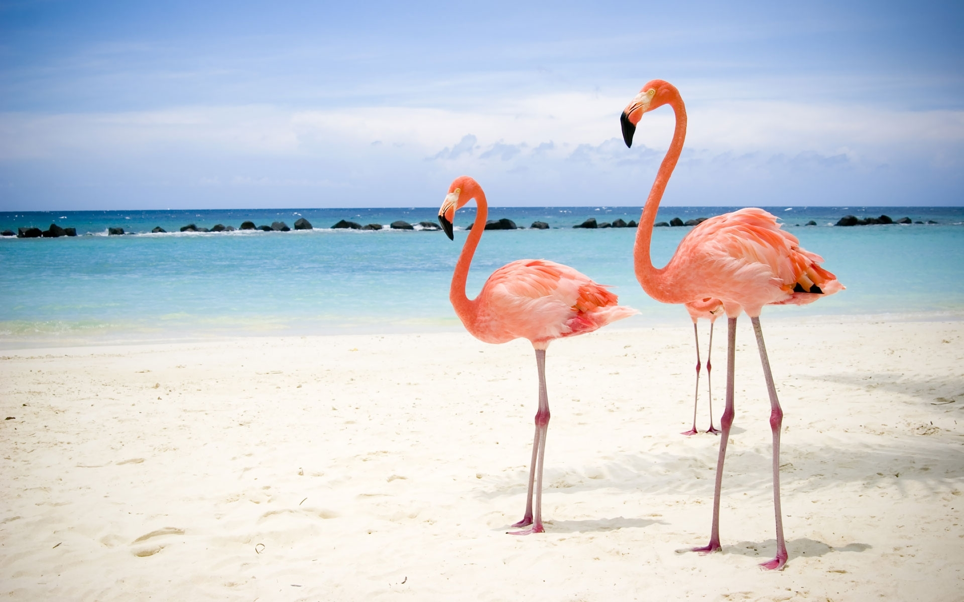 4358 download wallpaper Animals, Birds, Sea, Beach, Flamingo screensavers and pictures for free
