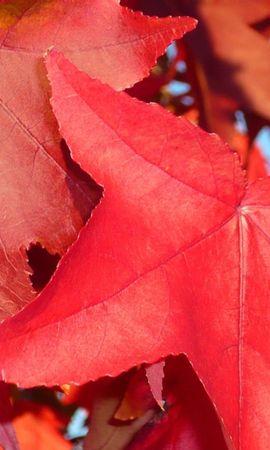 9999 скачать обои Растения, Осень, Листья - заставки и картинки бесплатно