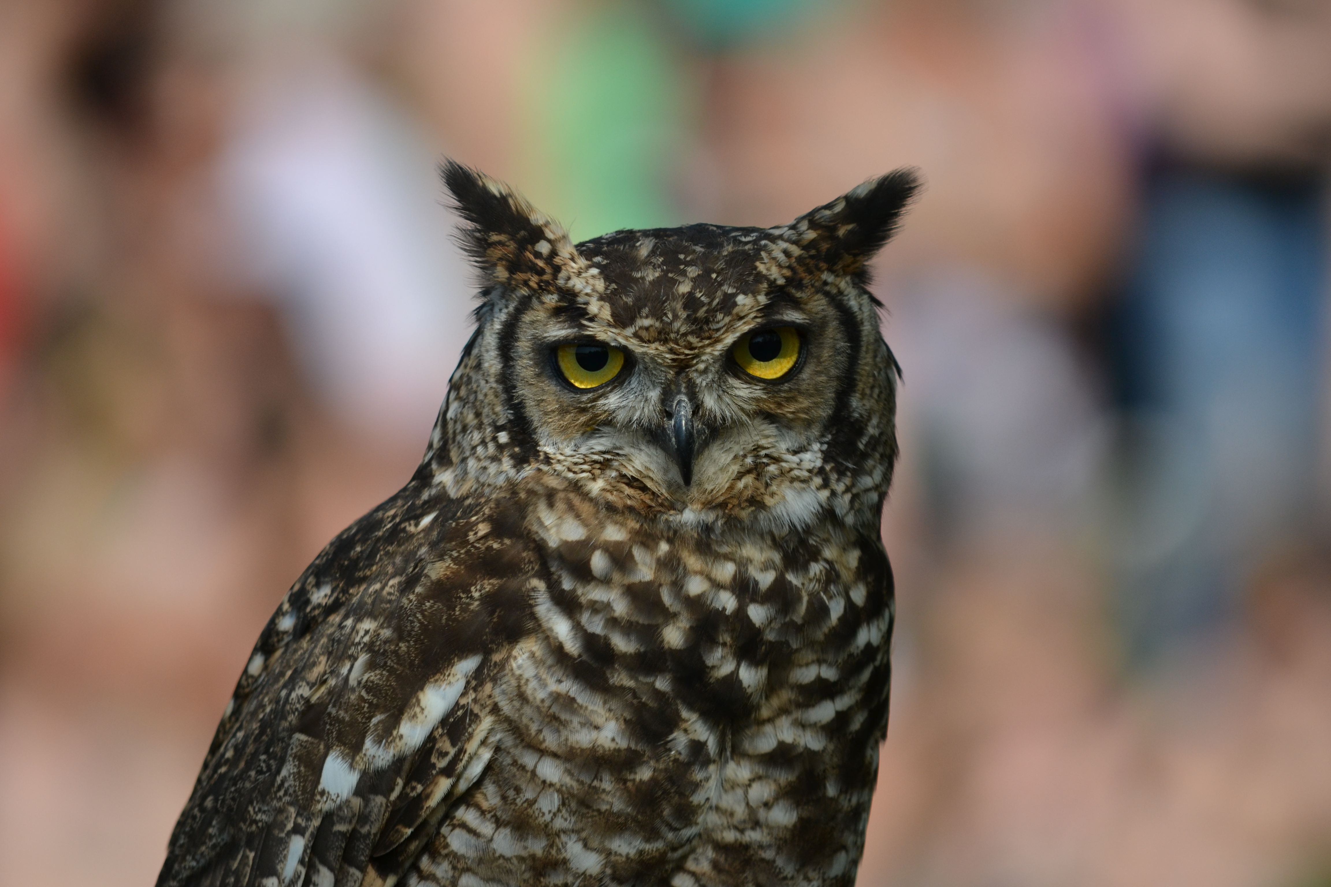 120841 download wallpaper Animals, Owl, Eagle Owl, Bird, Predator screensavers and pictures for free