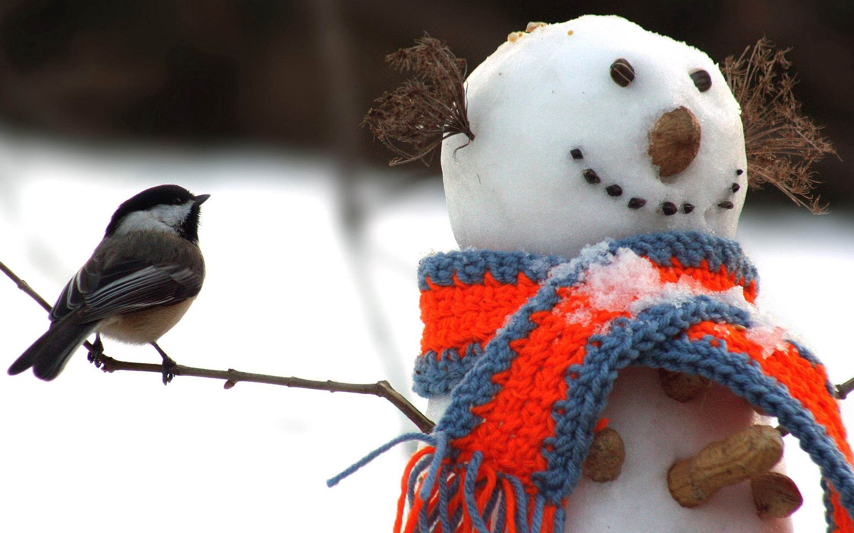85830 Screensavers and Wallpapers Scarf for phone. Download Animals, Winter, Snow, Snowman, Bird, Tit, Titica, Scarf pictures for free