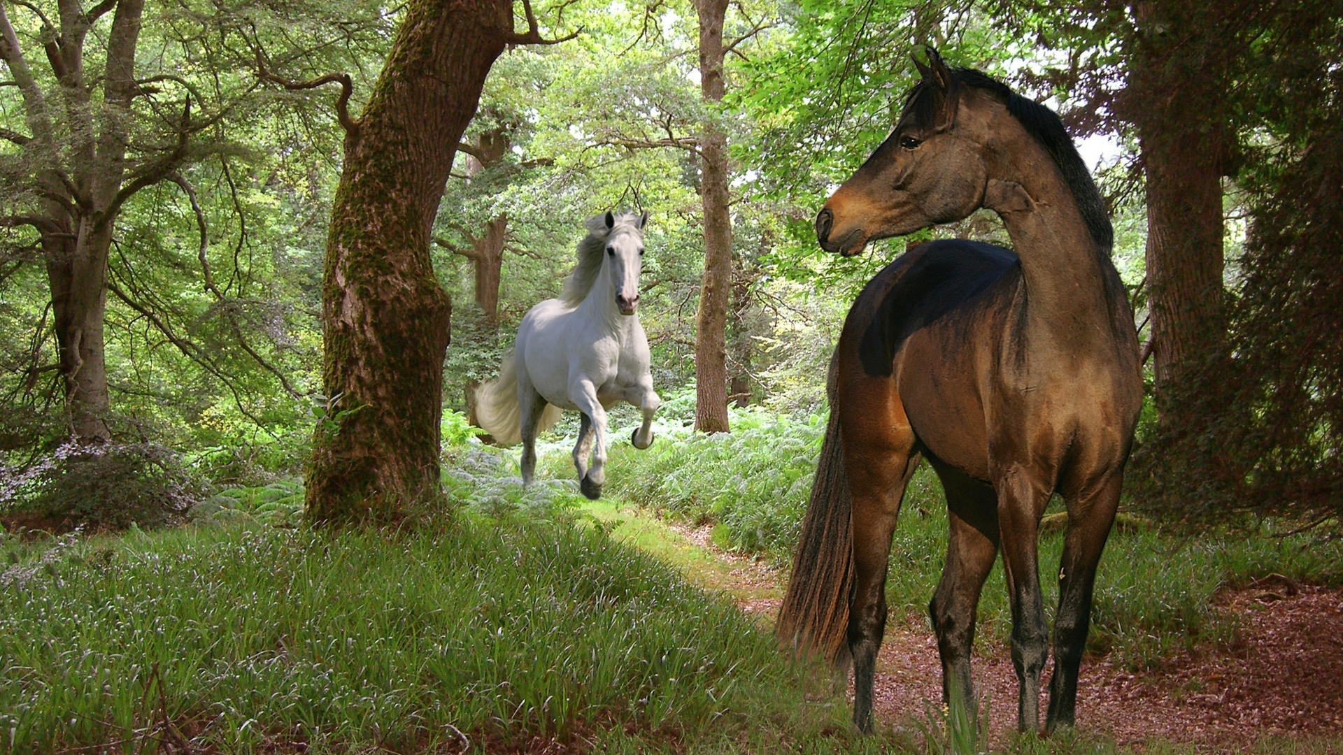 48396 download wallpaper Horses, Animals screensavers and pictures for free