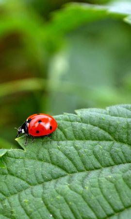 30457 Salvapantallas y fondos de pantalla Insectos en tu teléfono. Descarga imágenes de Insectos, Mariquitas gratis