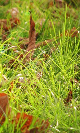 7486 скачать обои Растения, Трава, Фон, Листья - заставки и картинки бесплатно