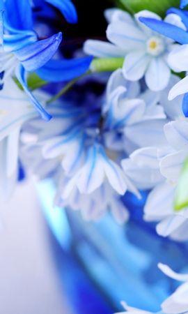 45285 скачать обои Растения, Цветы - заставки и картинки бесплатно