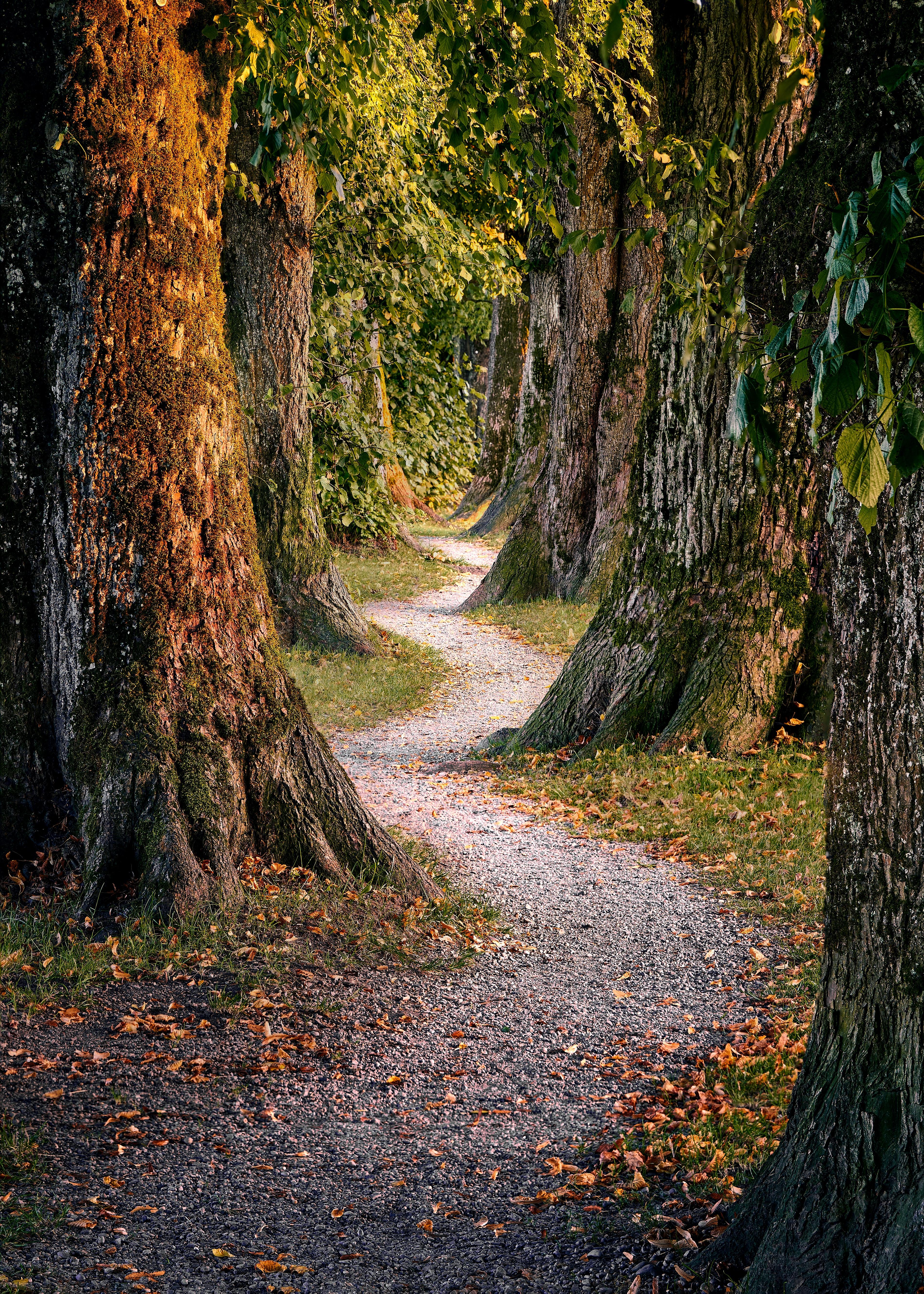 52607 скачать обои Лес, Деревья, Природа, Тропинка - заставки и картинки бесплатно