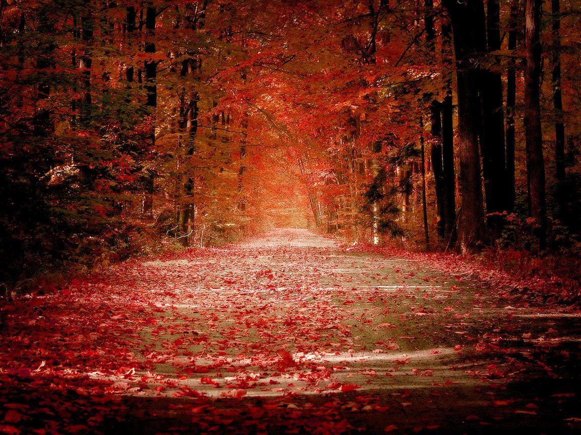 9383 download wallpaper Landscape, Roads, Autumn screensavers and pictures for free