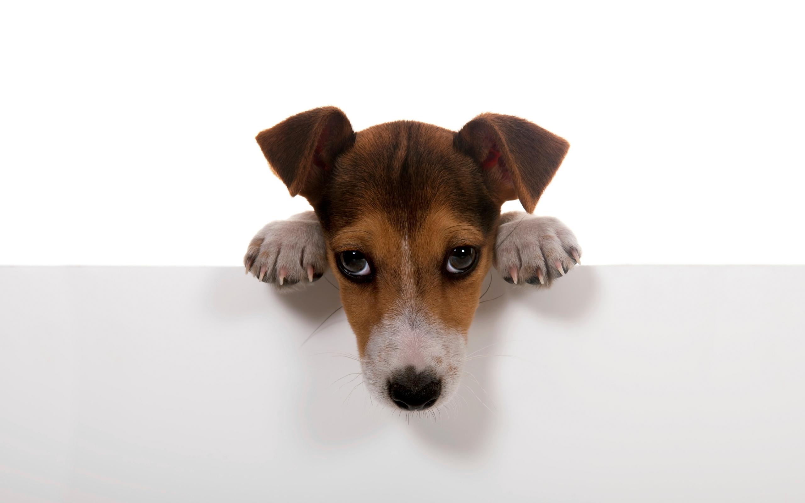 31746 Заставки и Обои Собаки на телефон. Скачать Животные, Собаки картинки бесплатно