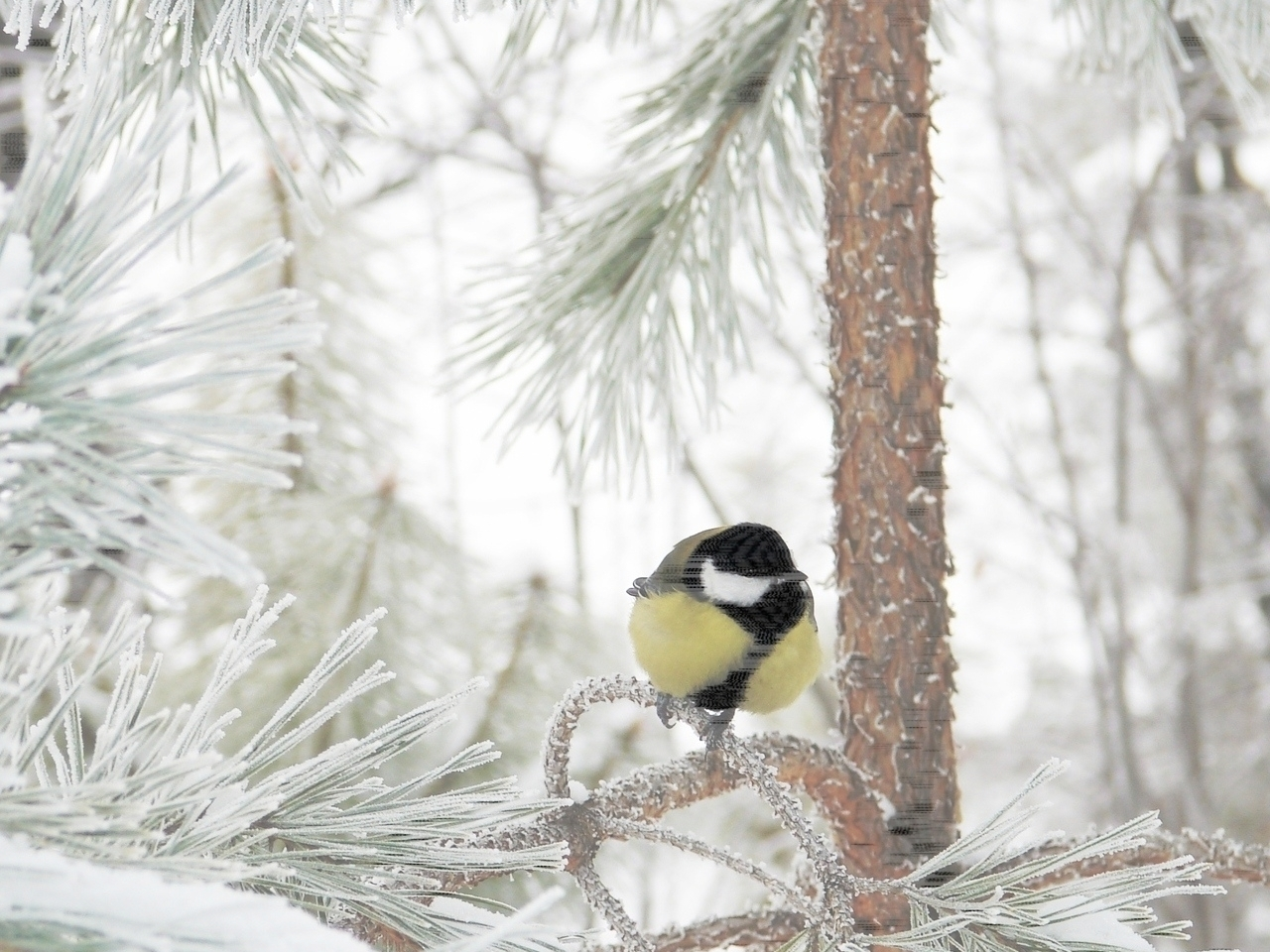 42307 download wallpaper Animals, Winter, Birds screensavers and pictures for free