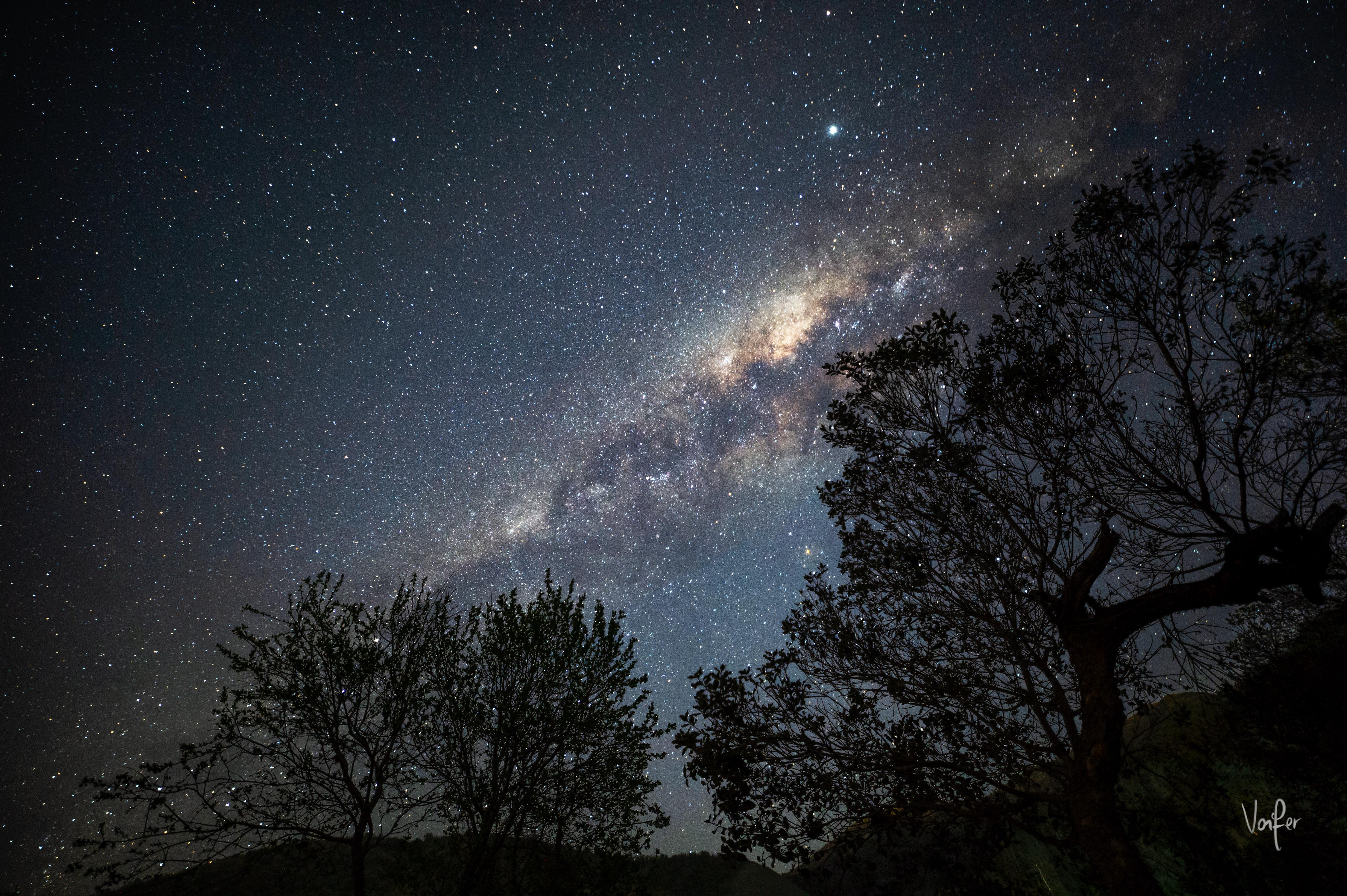 142777 скачать обои Темные, Туманность, Деревья, Ветки, Силуэт, Звезды - заставки и картинки бесплатно