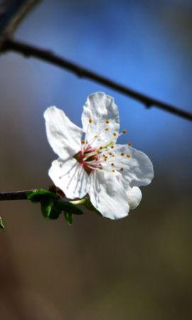 7790 скачать обои Растения, Цветы - заставки и картинки бесплатно